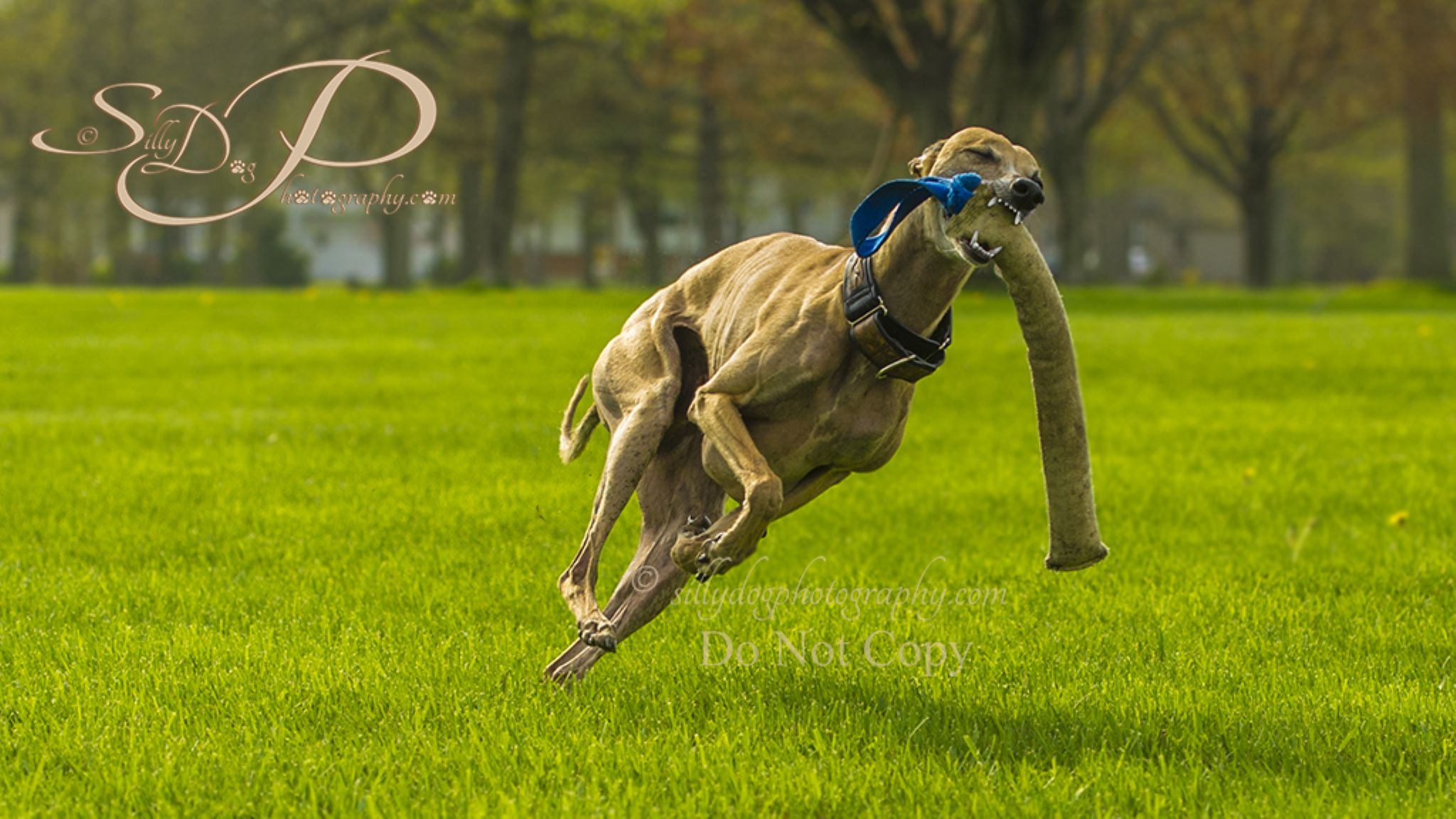 """Sultan...""""For the luv of it"""" by SillyDogPhotography"""
