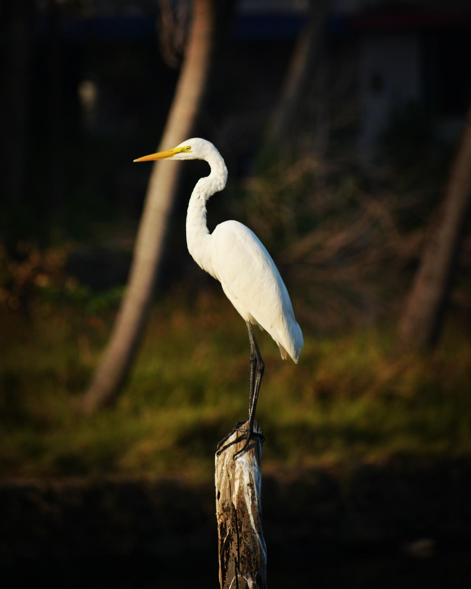 Photo in Random #bird #birds