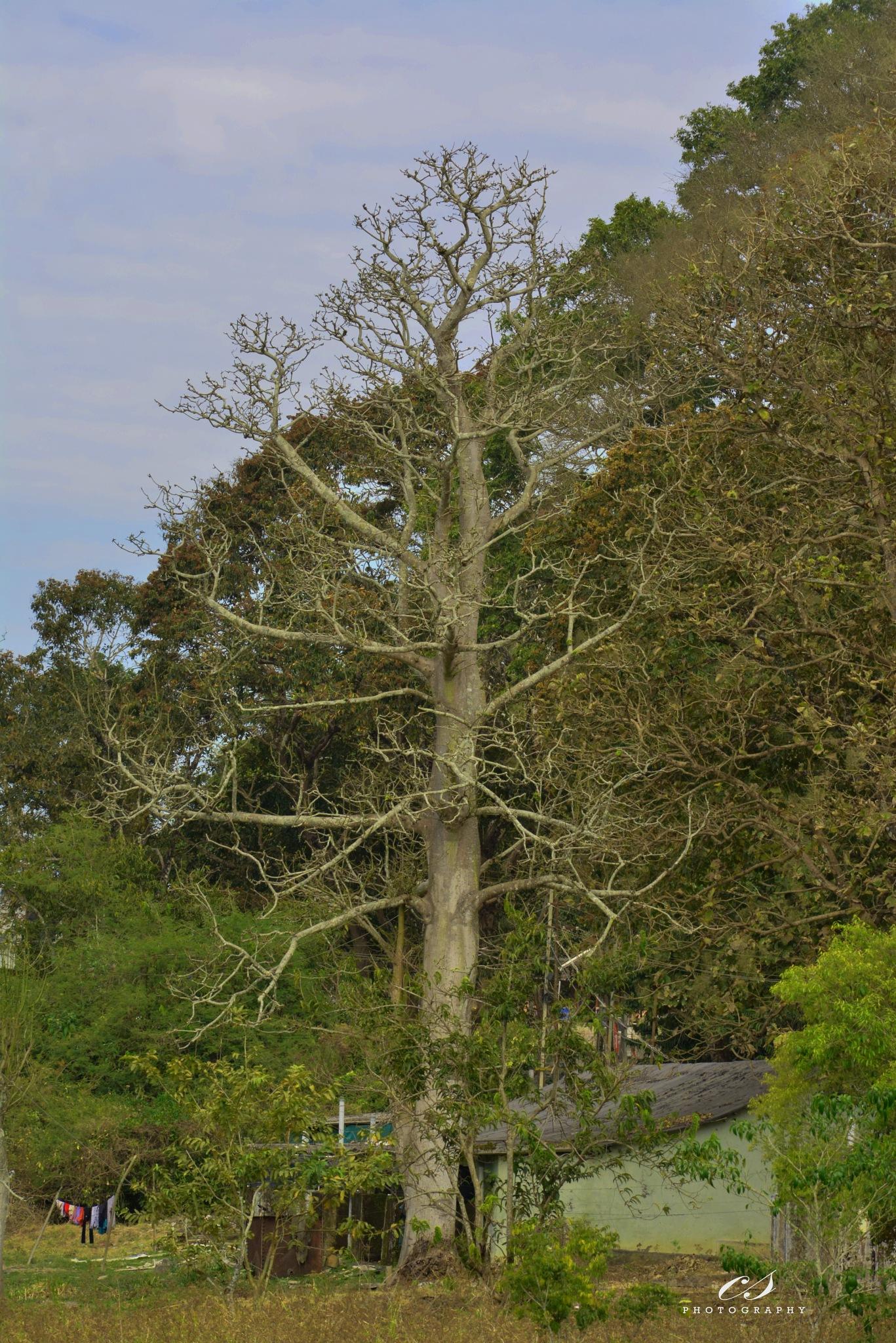 Tree by cs