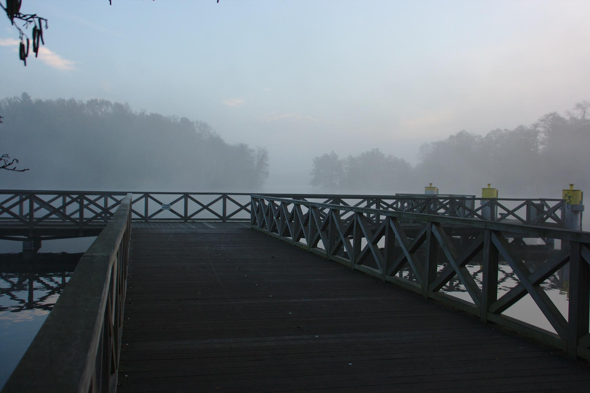 Foggy morning mood by Minzbart_Knipserei