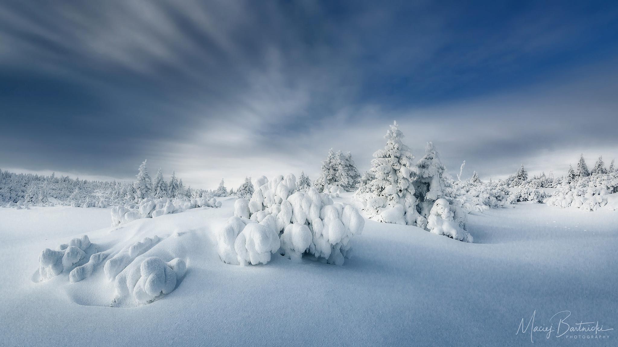Photo in Landscape #winter #karkonosze #poland #śnieżka #snow #snowcapped #evergreen