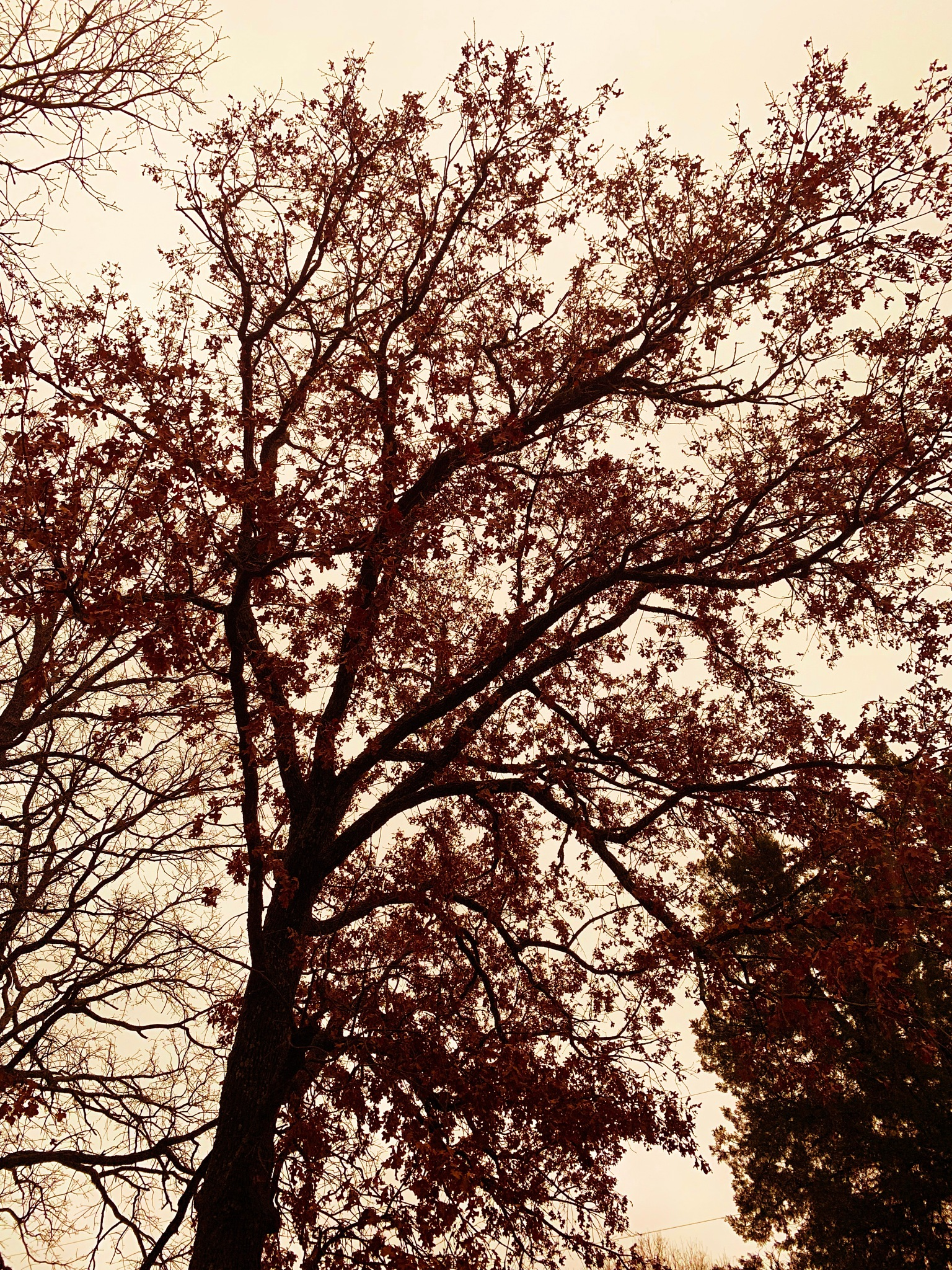 Photo in Nature #red #tree #nature