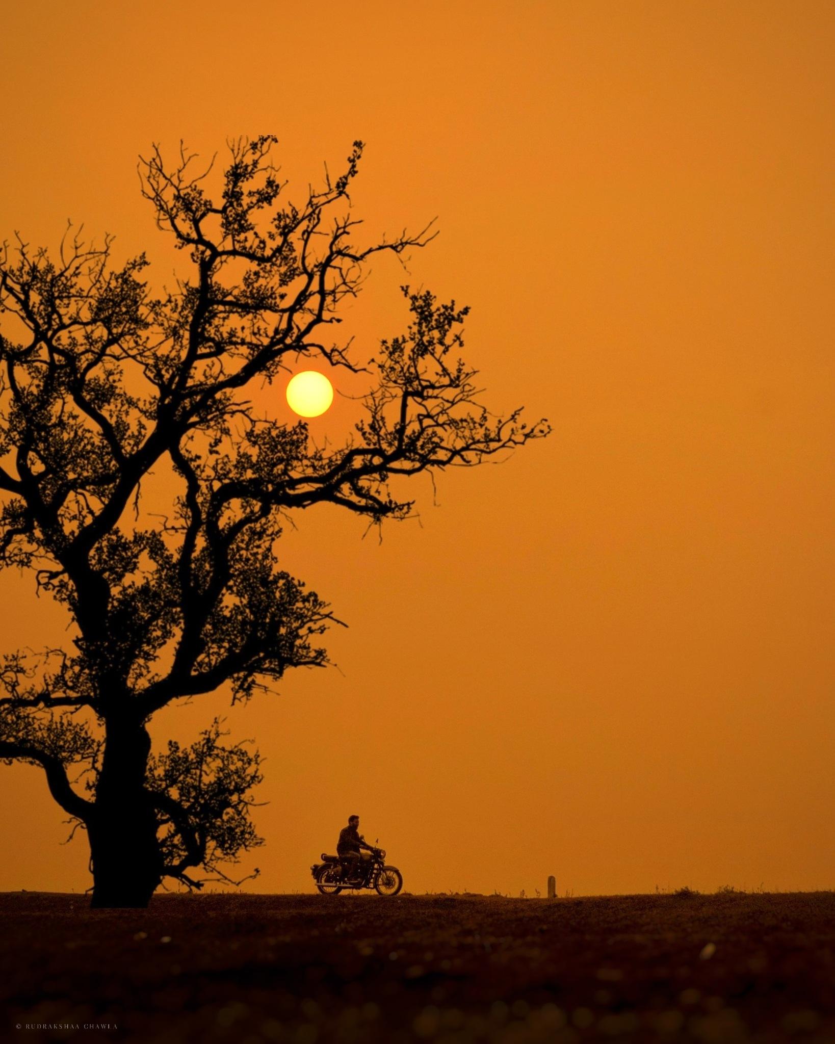 Photo in Travel #bike #sunset #bullet #royalenfield #sun #orange #amazing #tree