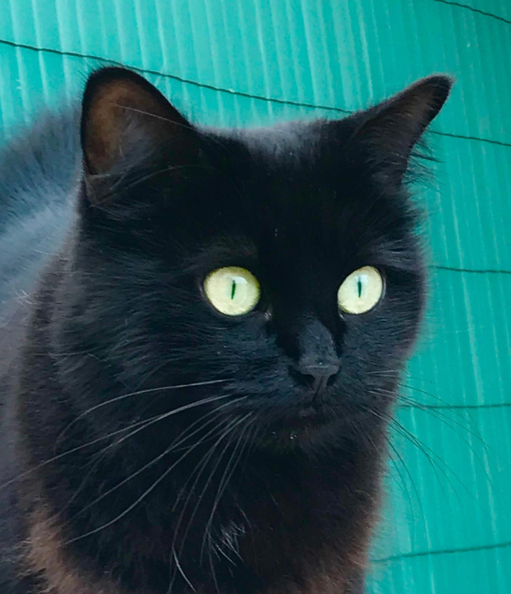Neighbor's cat saw a dog by Pilvi Pouta-Manninen