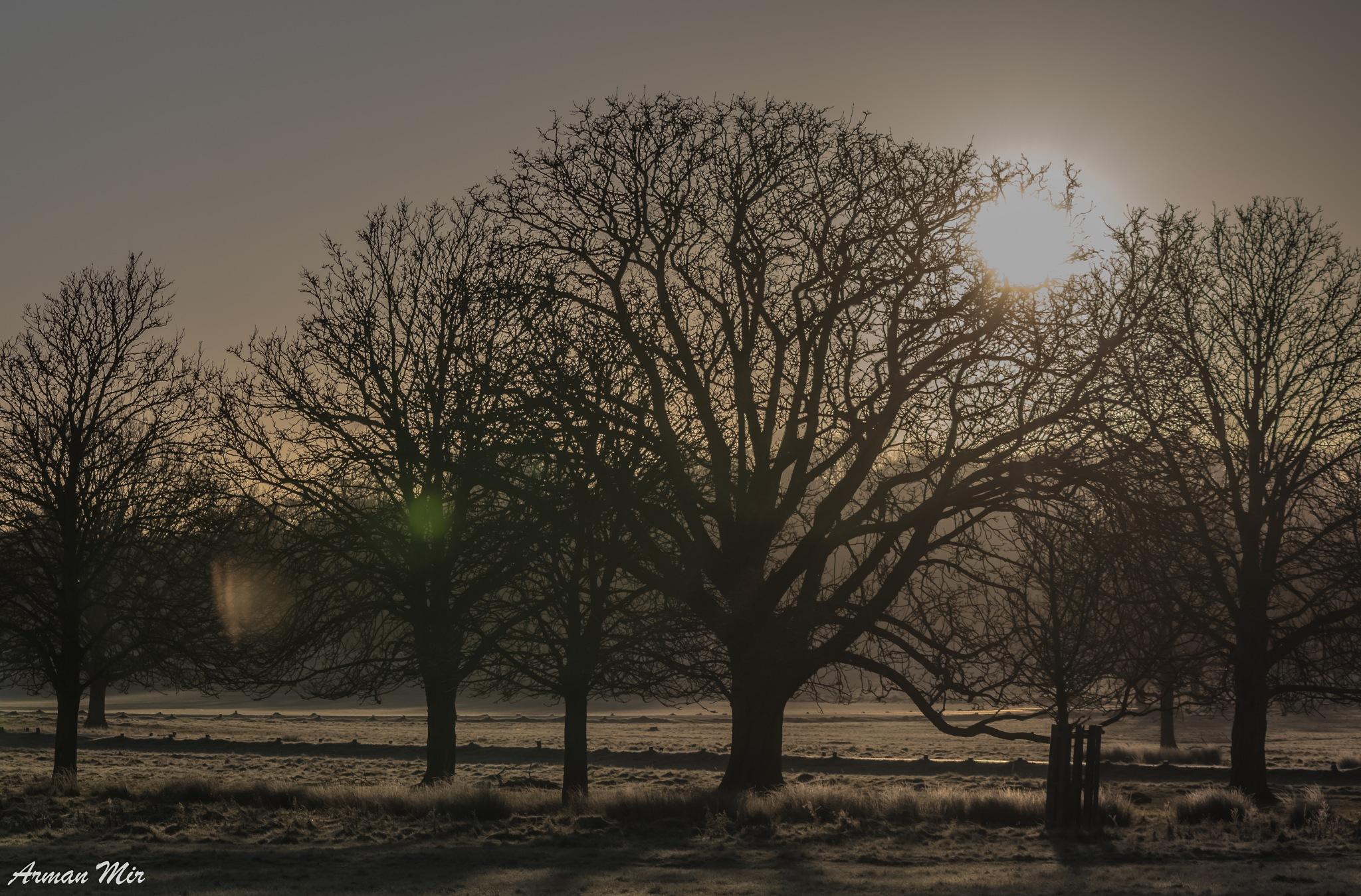 Photo in Landscape #richmond park #london #united kingdom #dawn #winter #frost #frosty #sun #tree