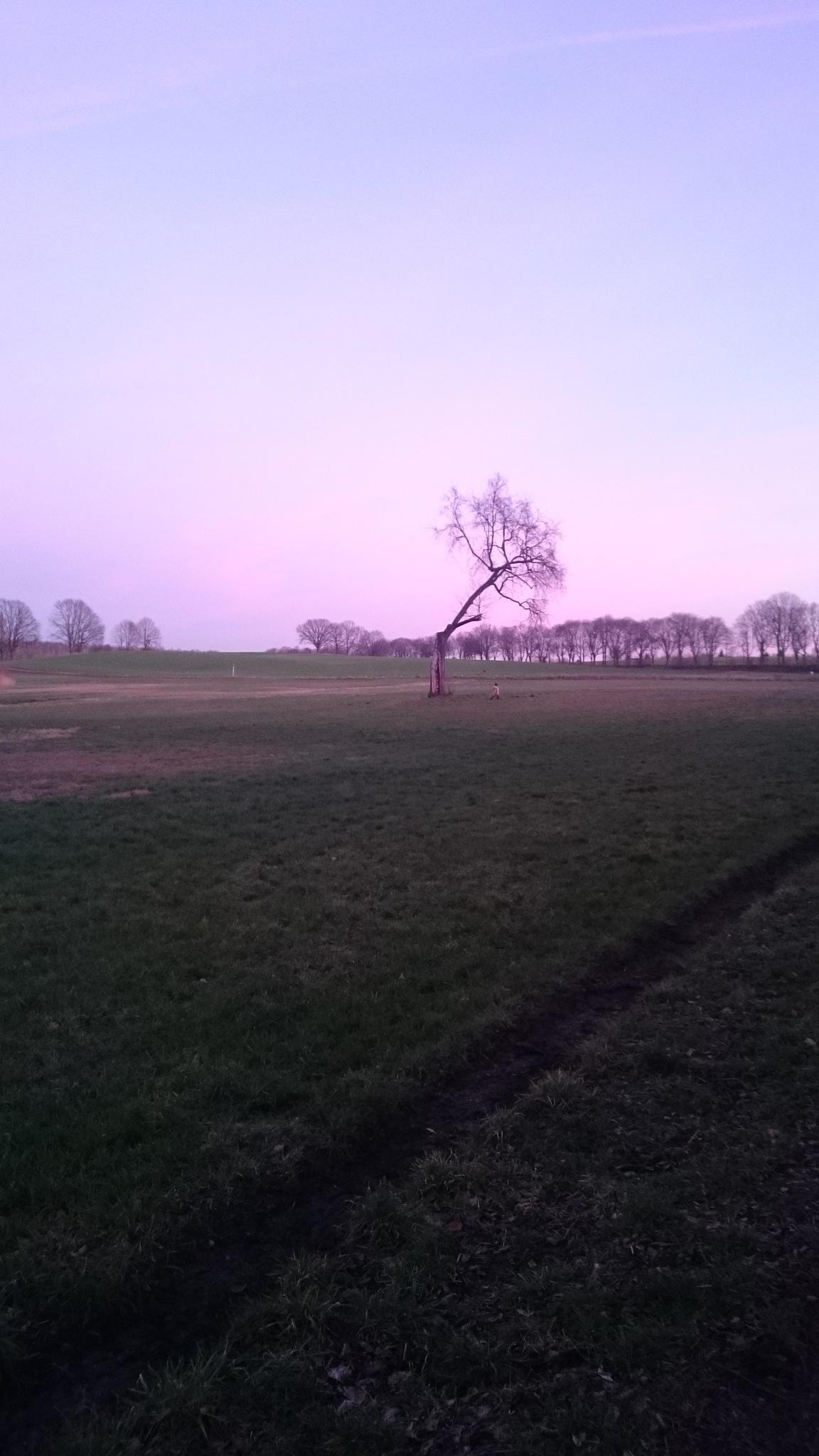 tree & trees  by AWL