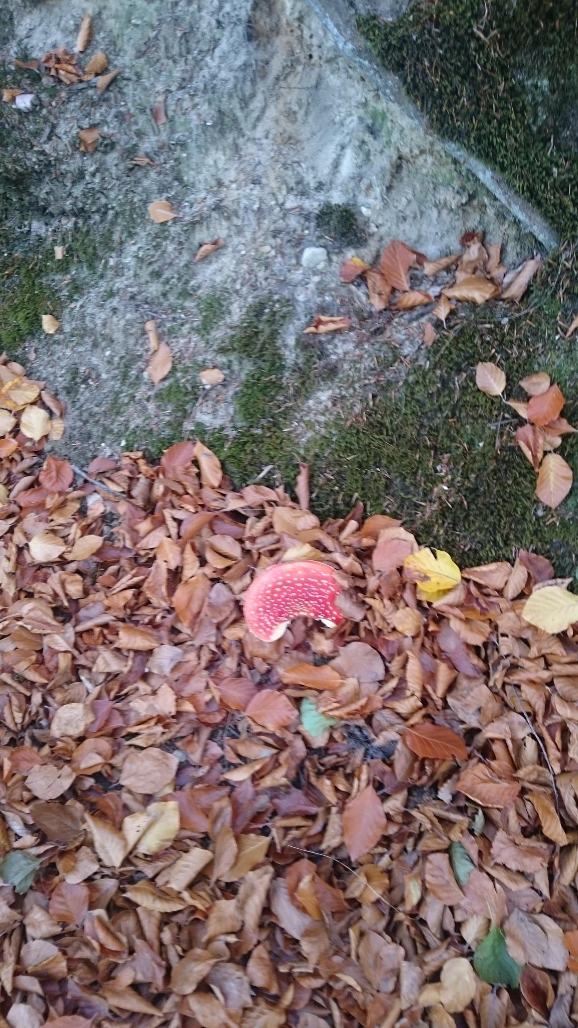 Photo in Nature #haunts #around berlin #nature #mushroom #leaves #foliage #moss