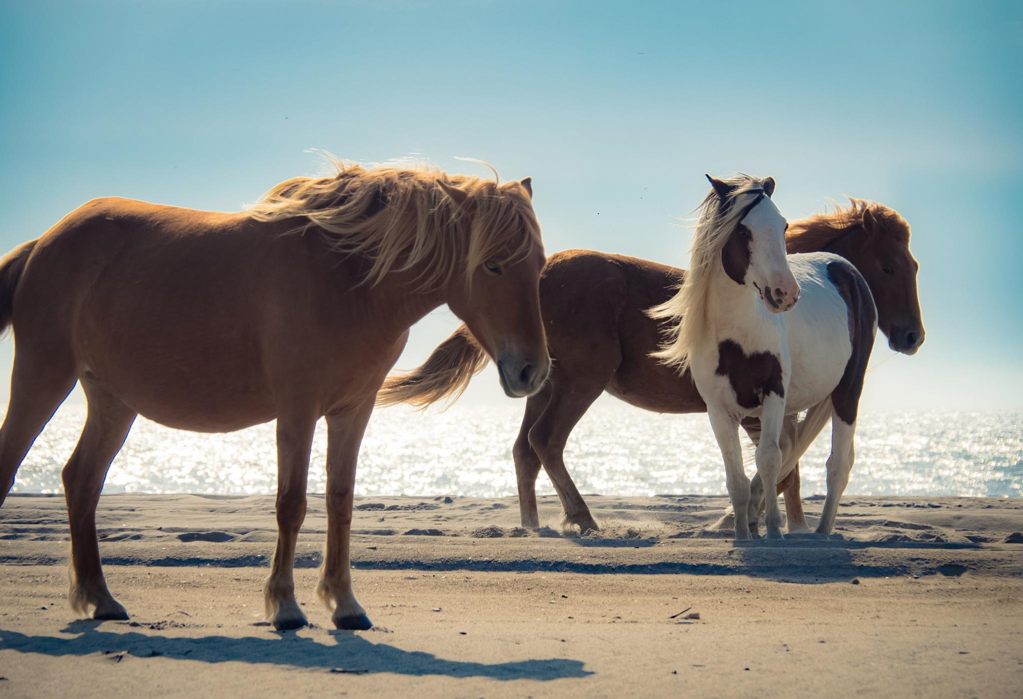 Photo in Animal #horses #wildlife #morning #lighting #beach #animals #ocean #cute #life #simple #minimalist
