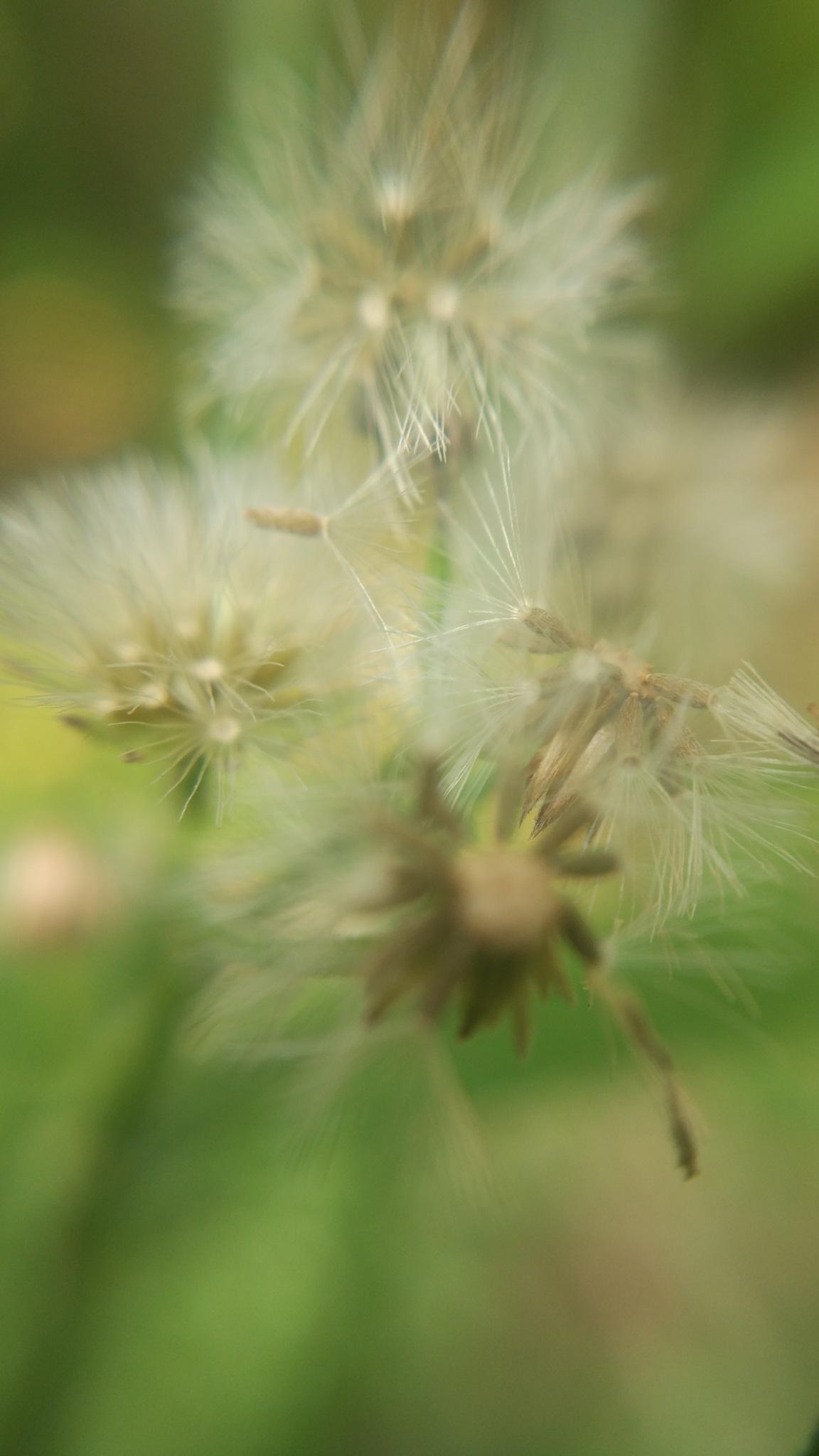 Photo in Random #flower #photography #love #macro