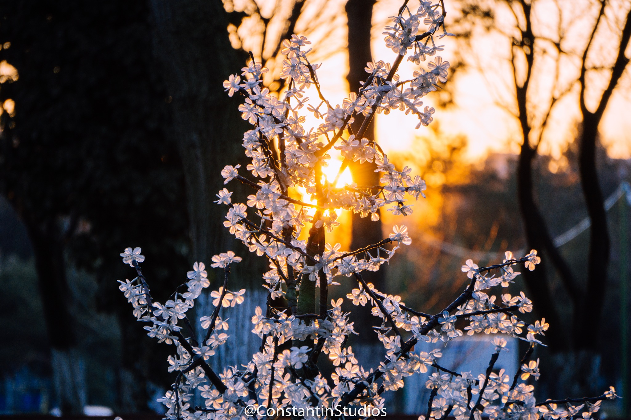 flower in sunset by Bogdan Constantin Badea