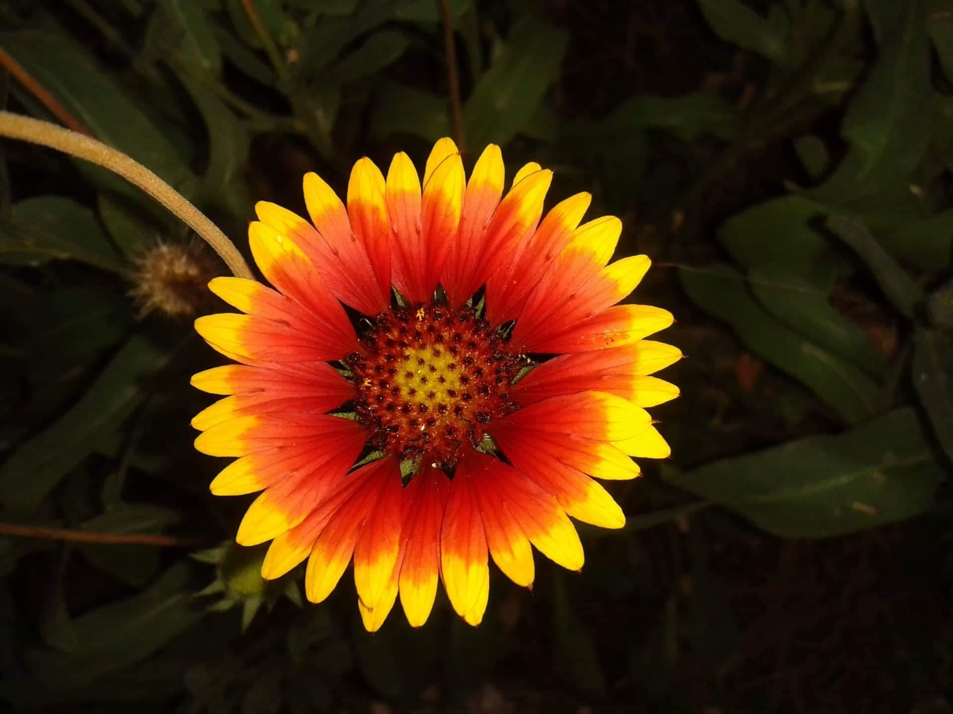 Photo in Nature #summer flower