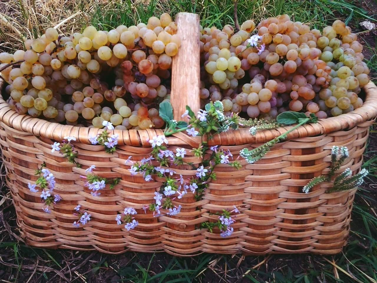 Photo in Food #grape flowers autumm