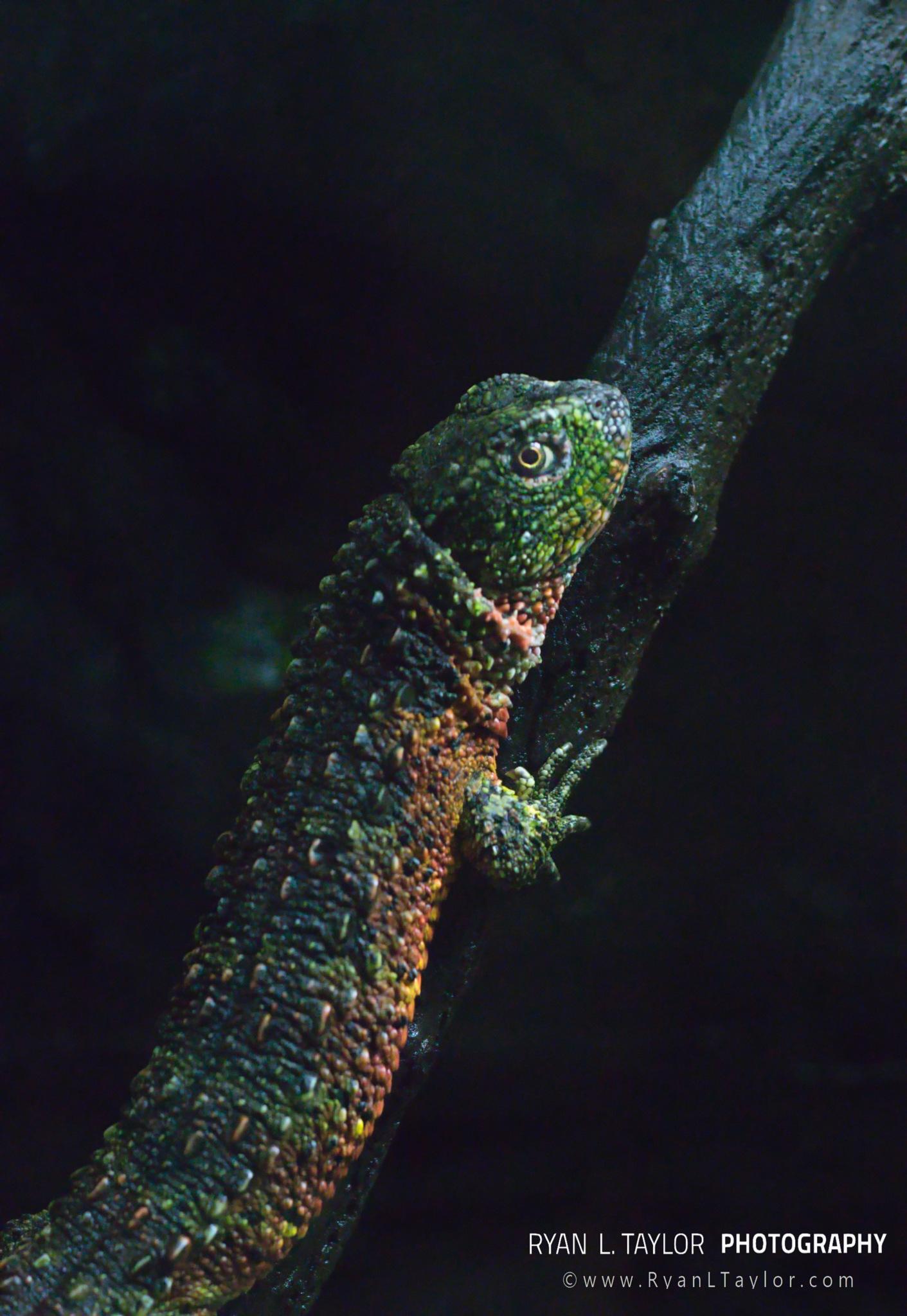 Photo in Animal #chinesecrocodilelizard #aquarium #lizards
