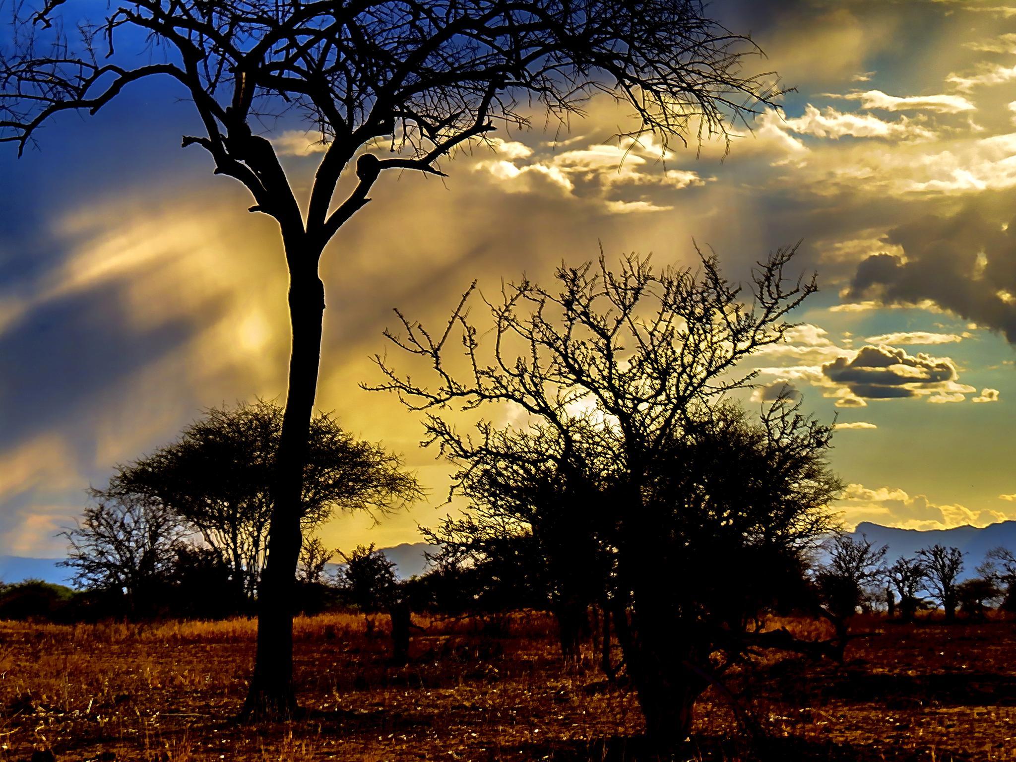 Warm African Rain Shower by David Owen