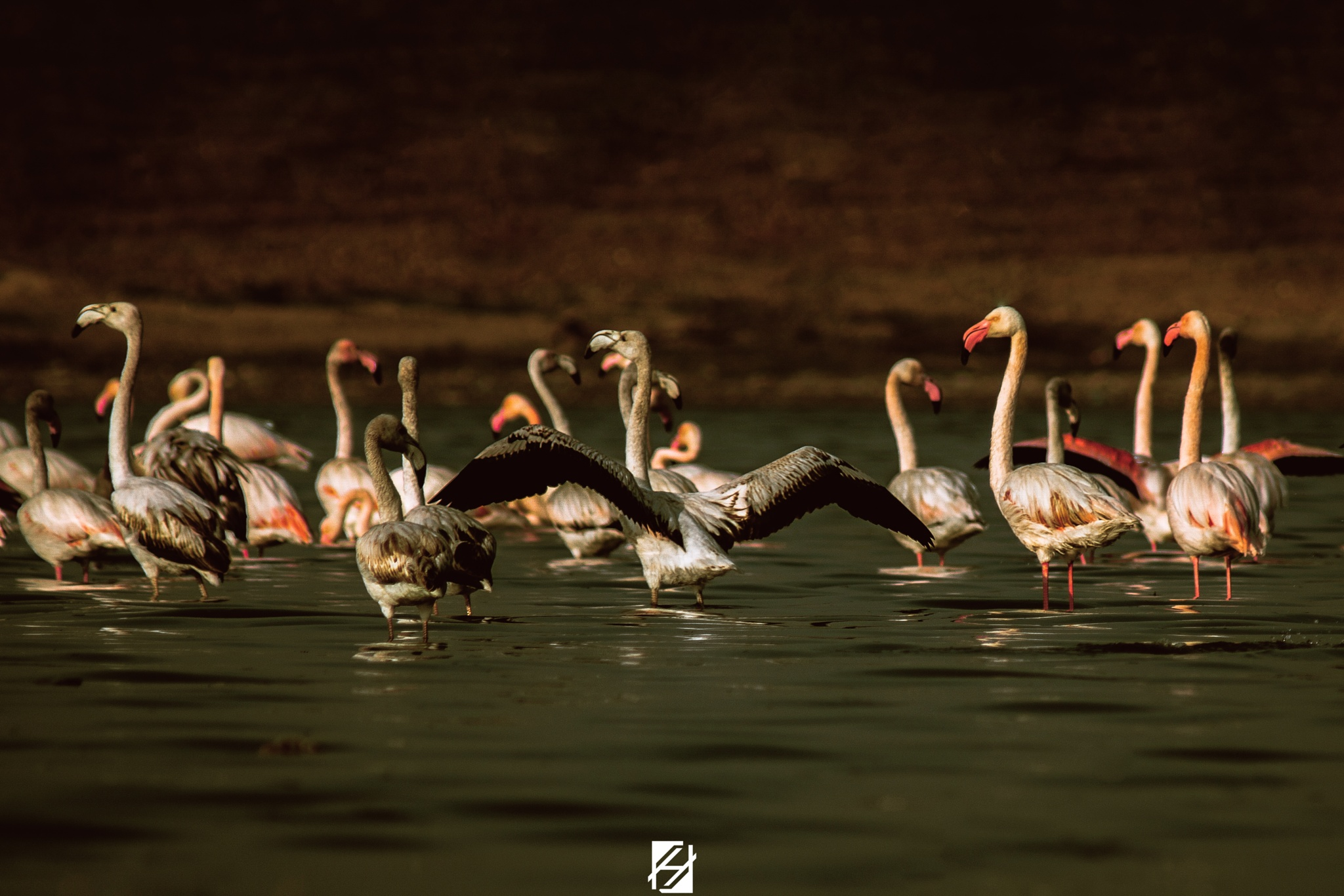 Collective Glimpse by Hichemou Photography