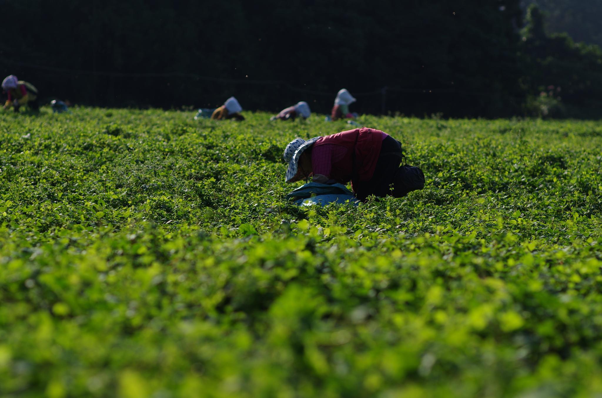 Photo in People #jeju going #september #landscape of jeju #jeju #landscape