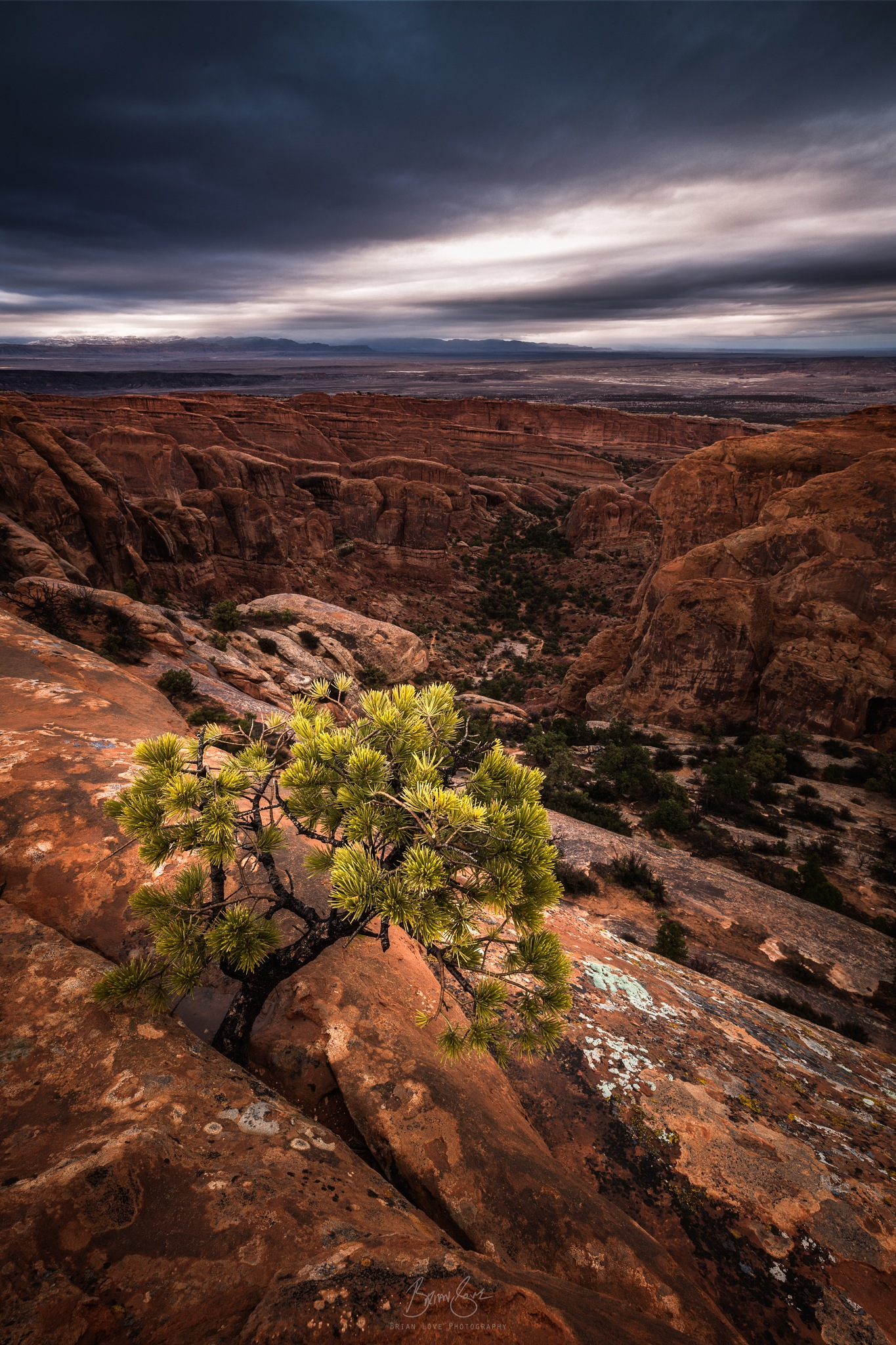 Tree on the Divide by Brian Love