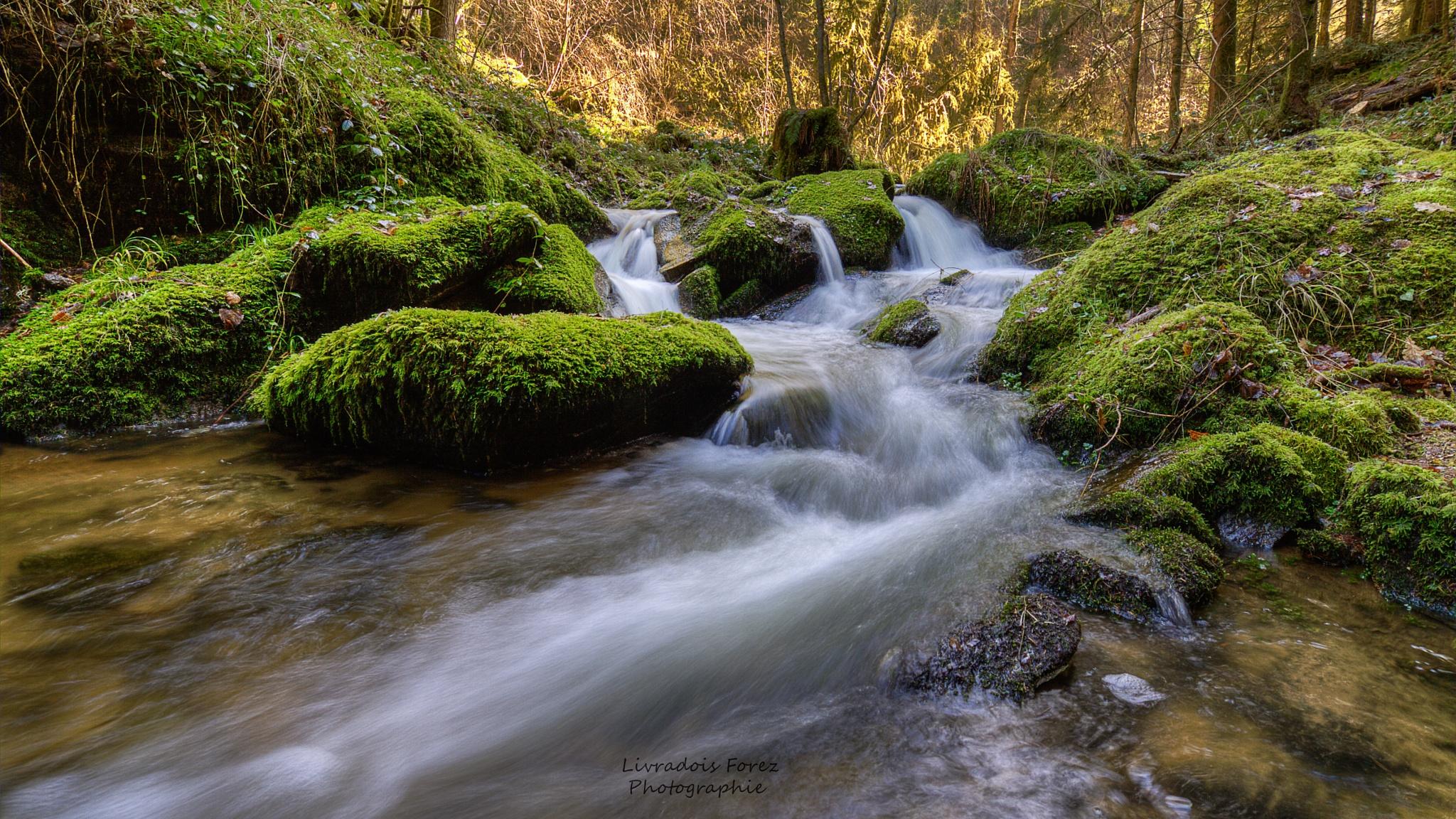 Gorges du ruisseau des Palles by LivradoisForezPhotographie
