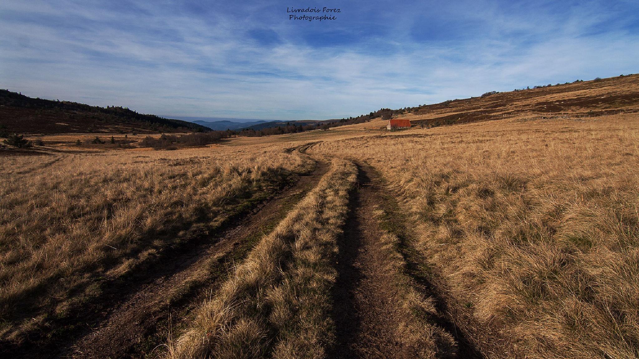 un des chemins de Monthallier... by LivradoisForezPhotographie