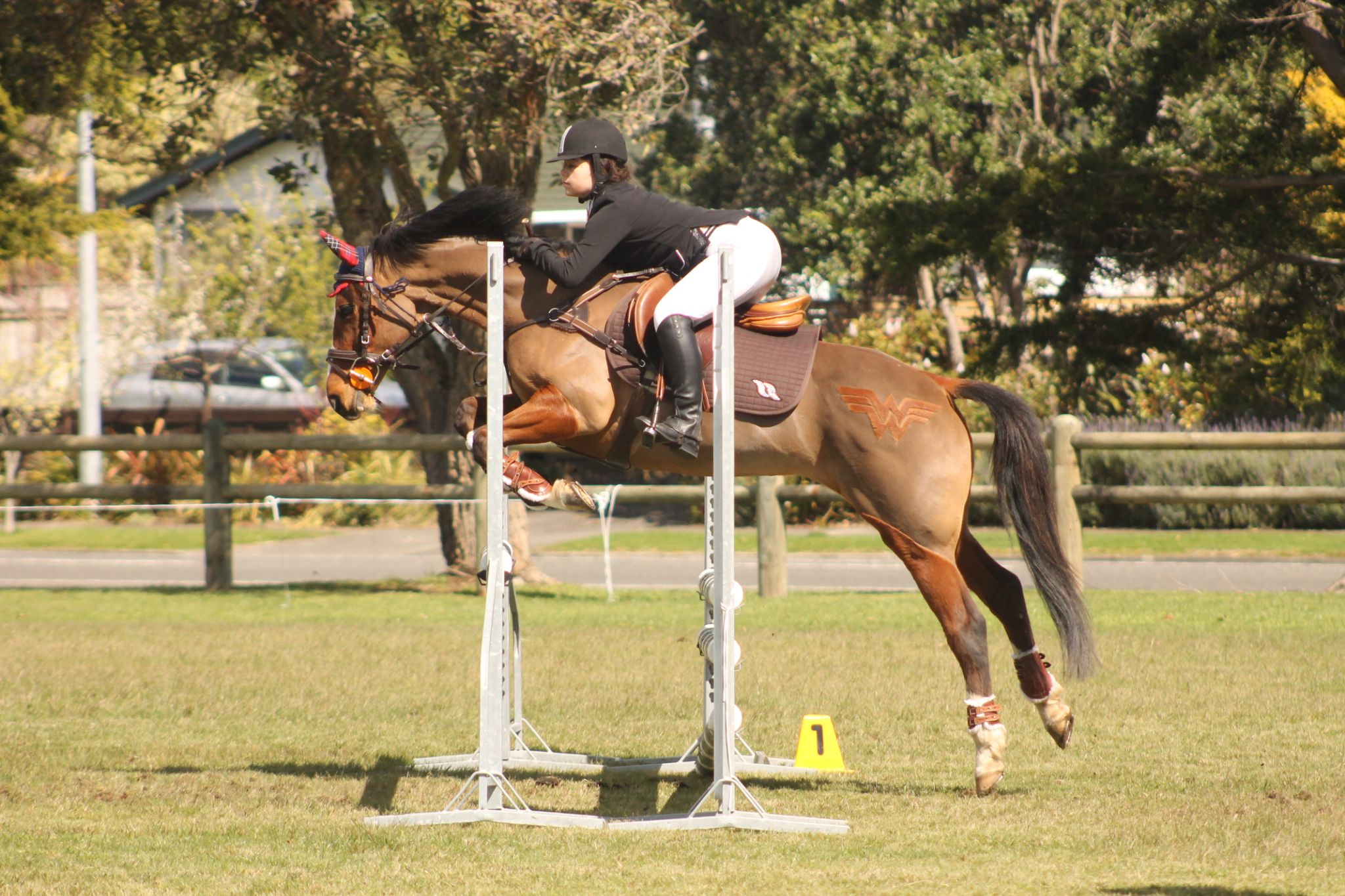 Showjumping by C.A Photography
