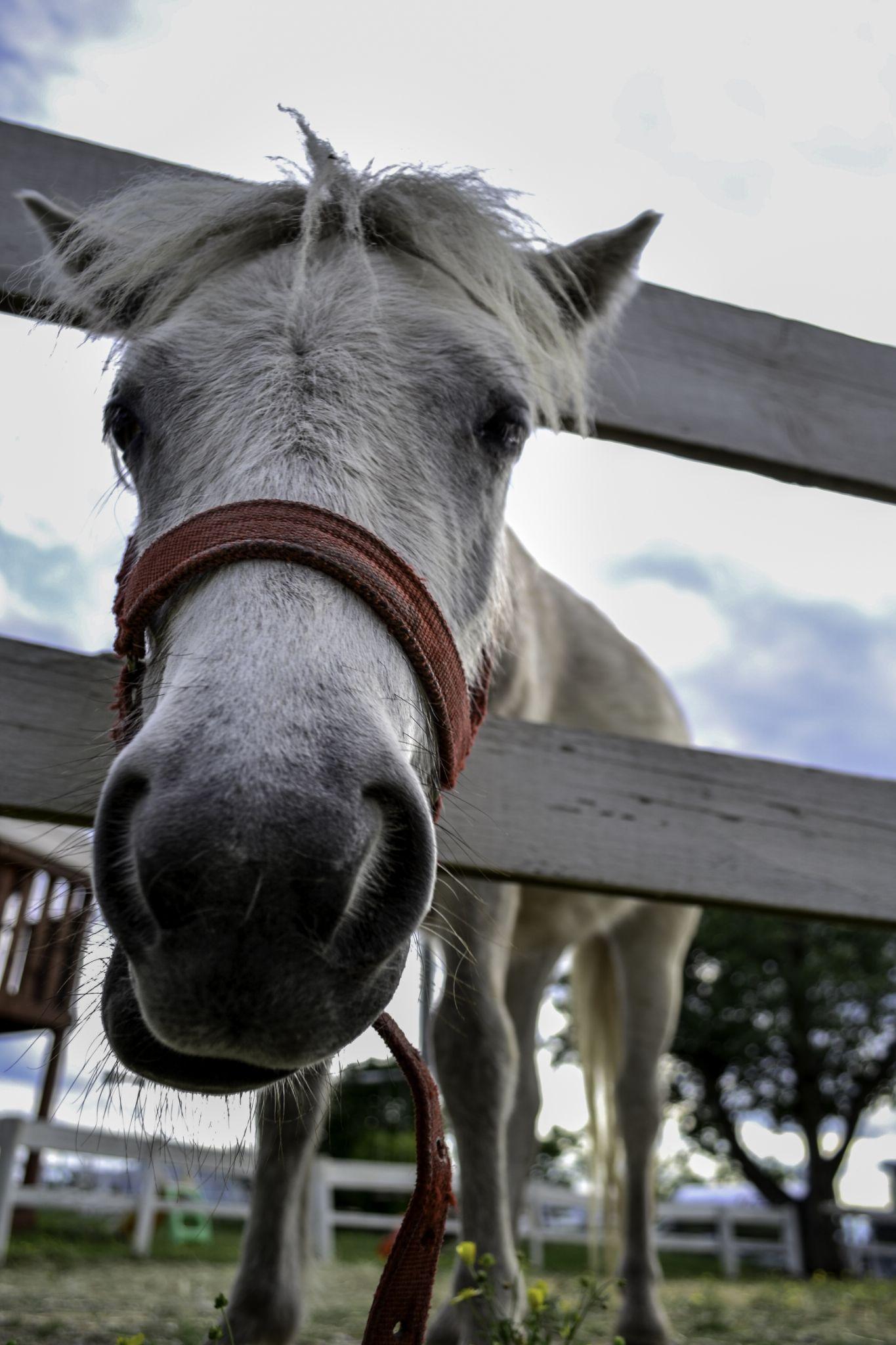 horse by jure kralj