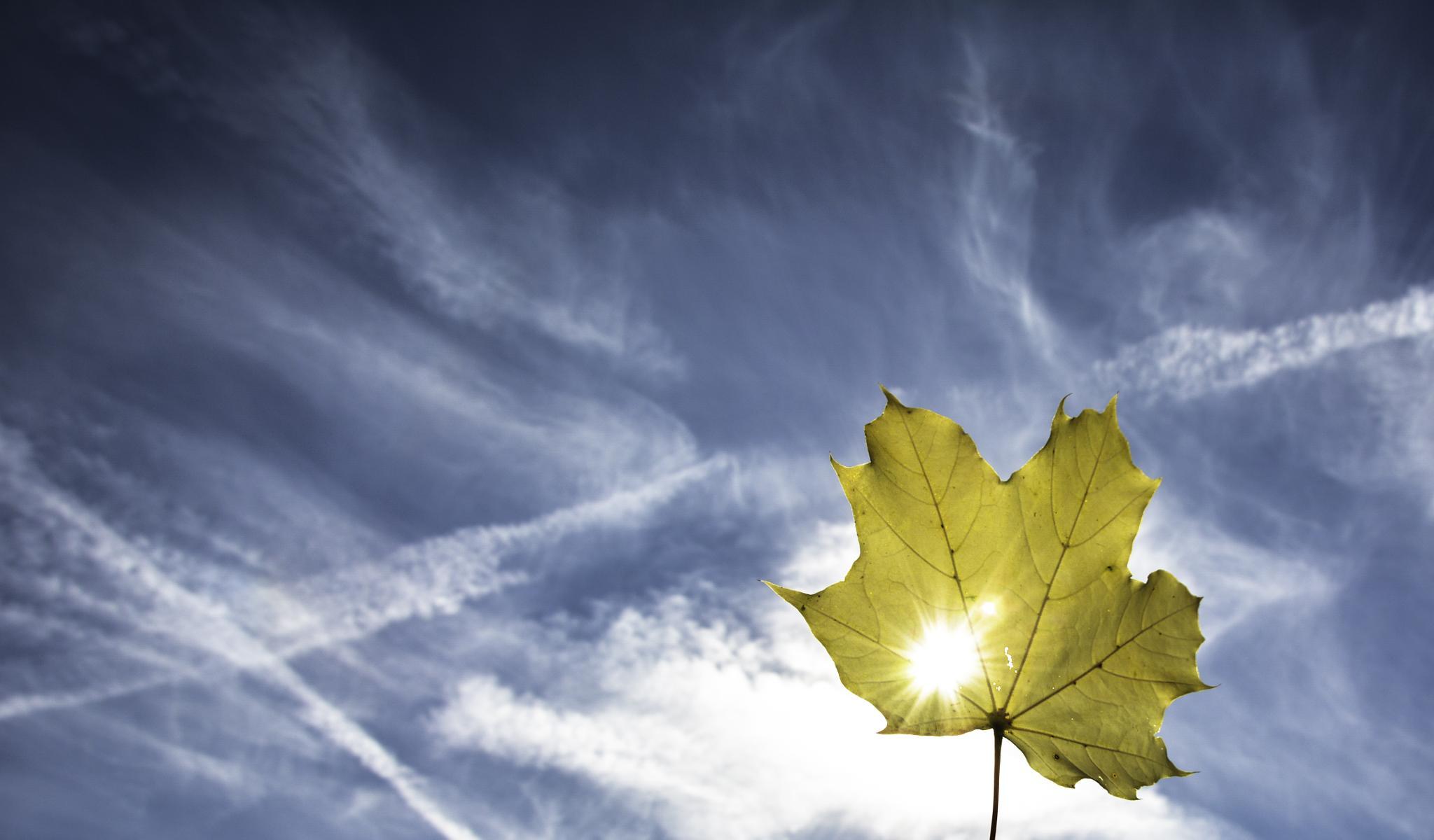 Autumn sun by jure kralj