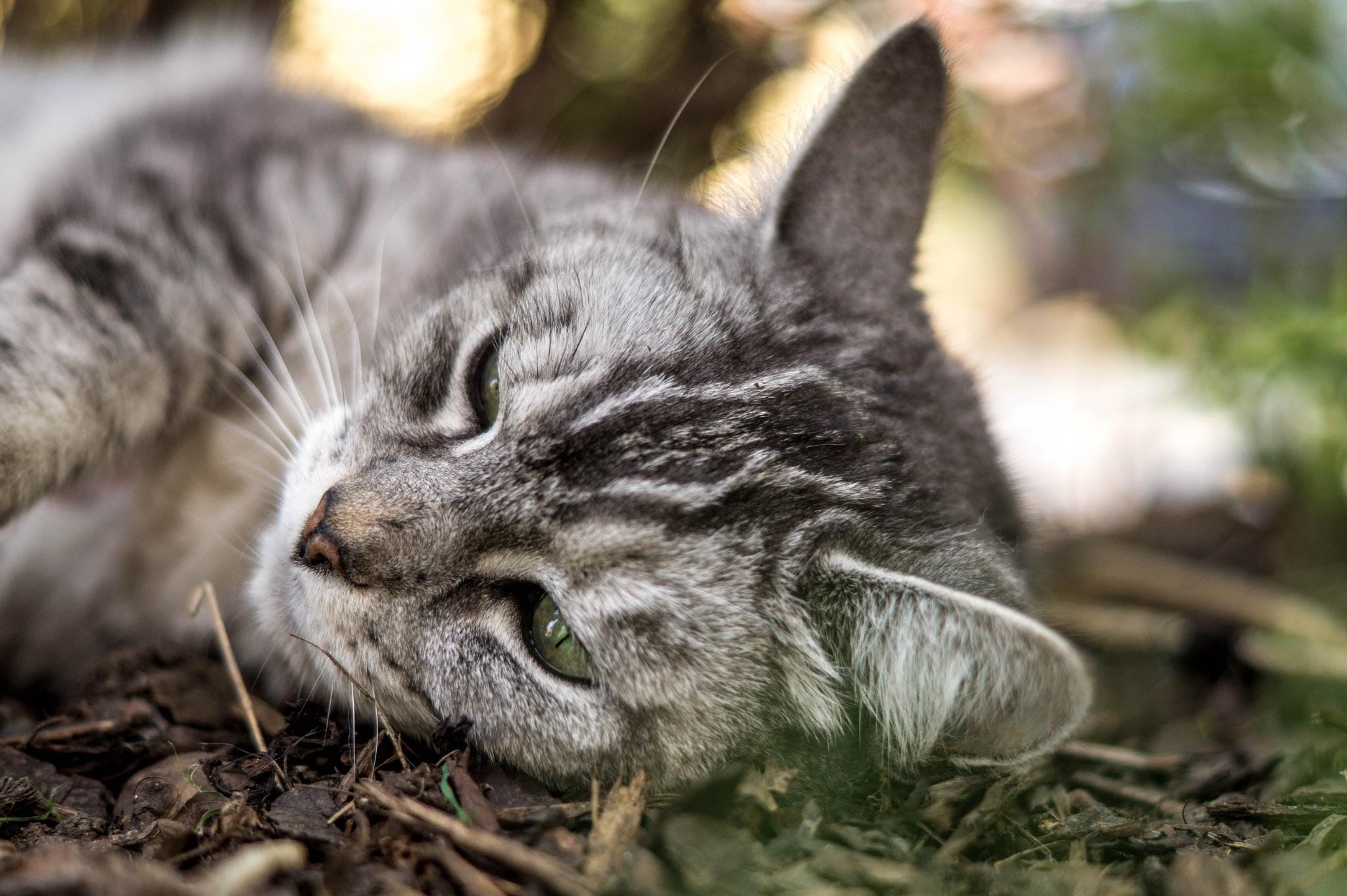 lazy cat by Sebastian Hocke
