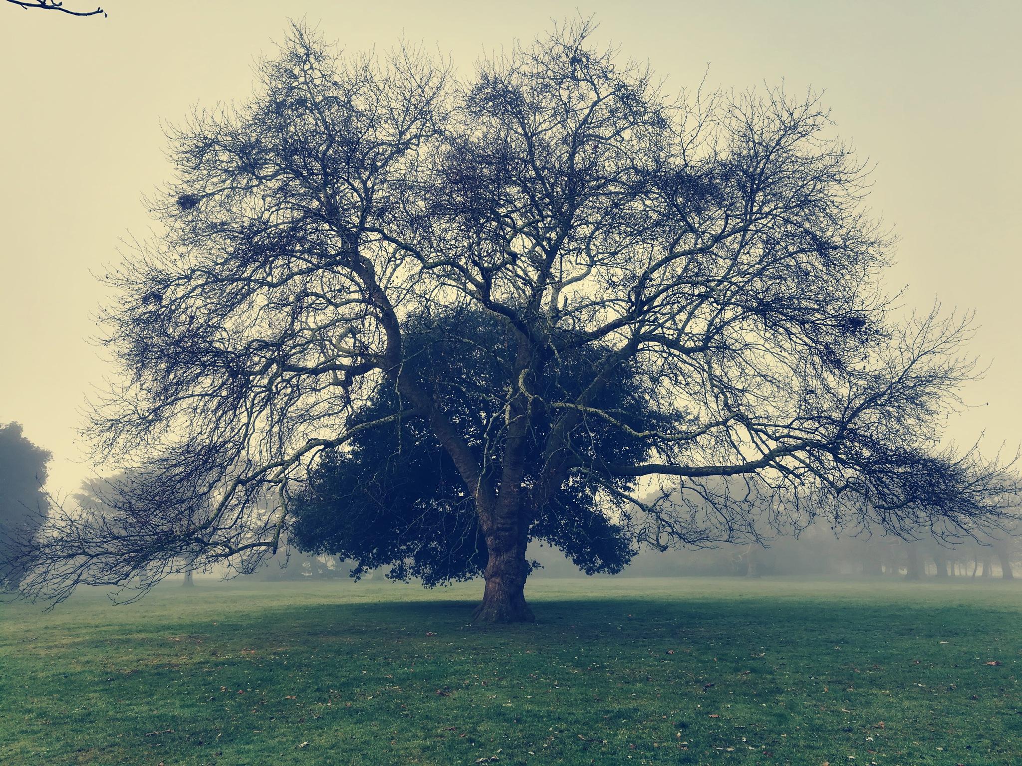 Tree  by Pavlina H