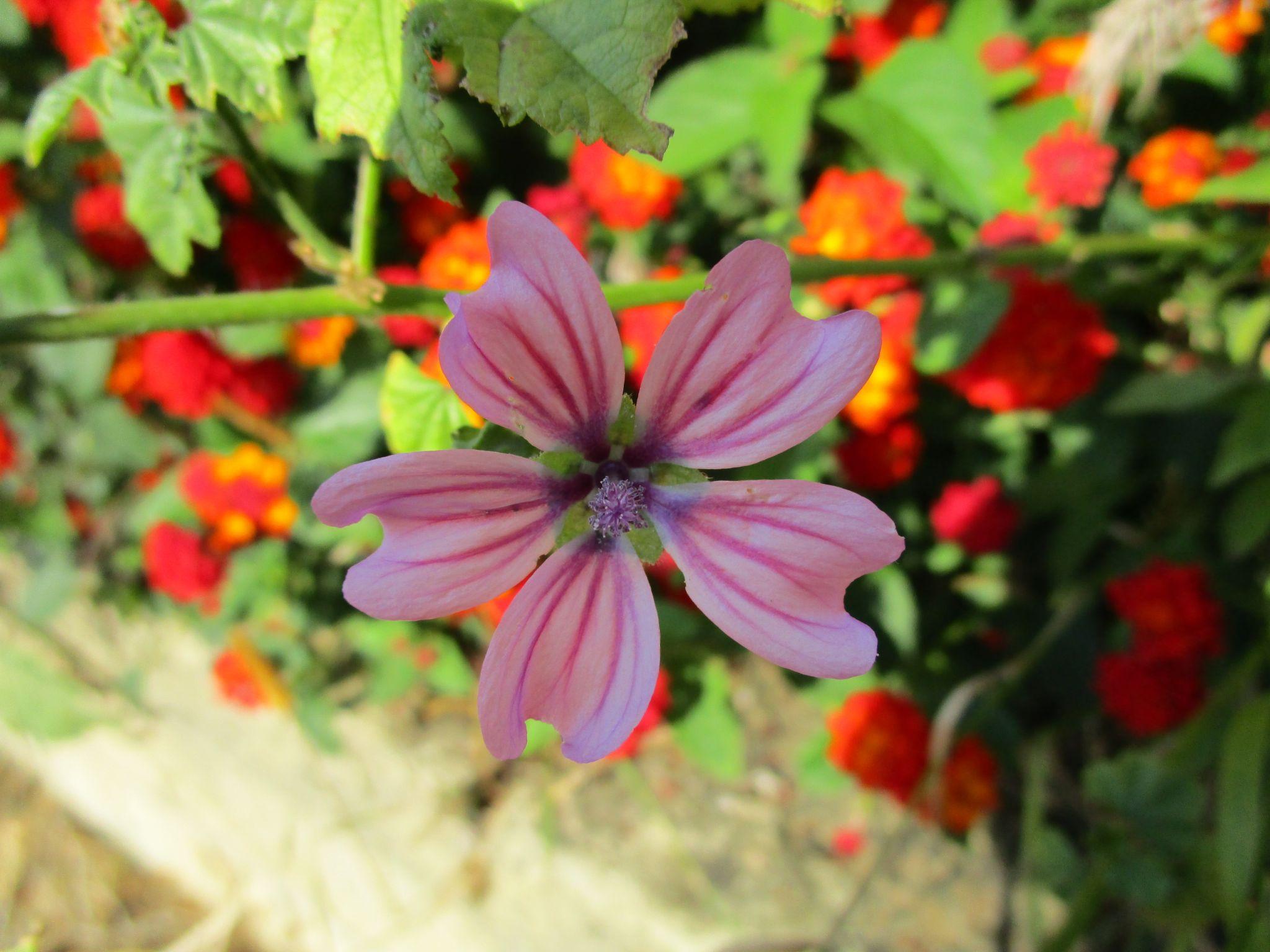 flowers 4 by Raffaele Tria