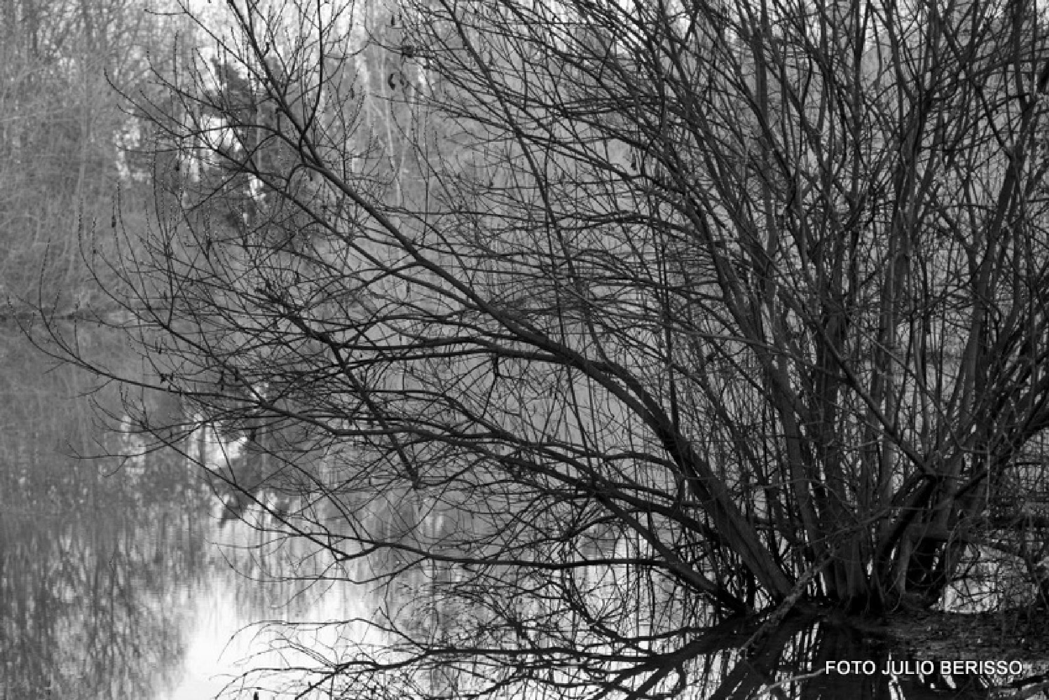 inverno 4 by Julio Cesar Berisso