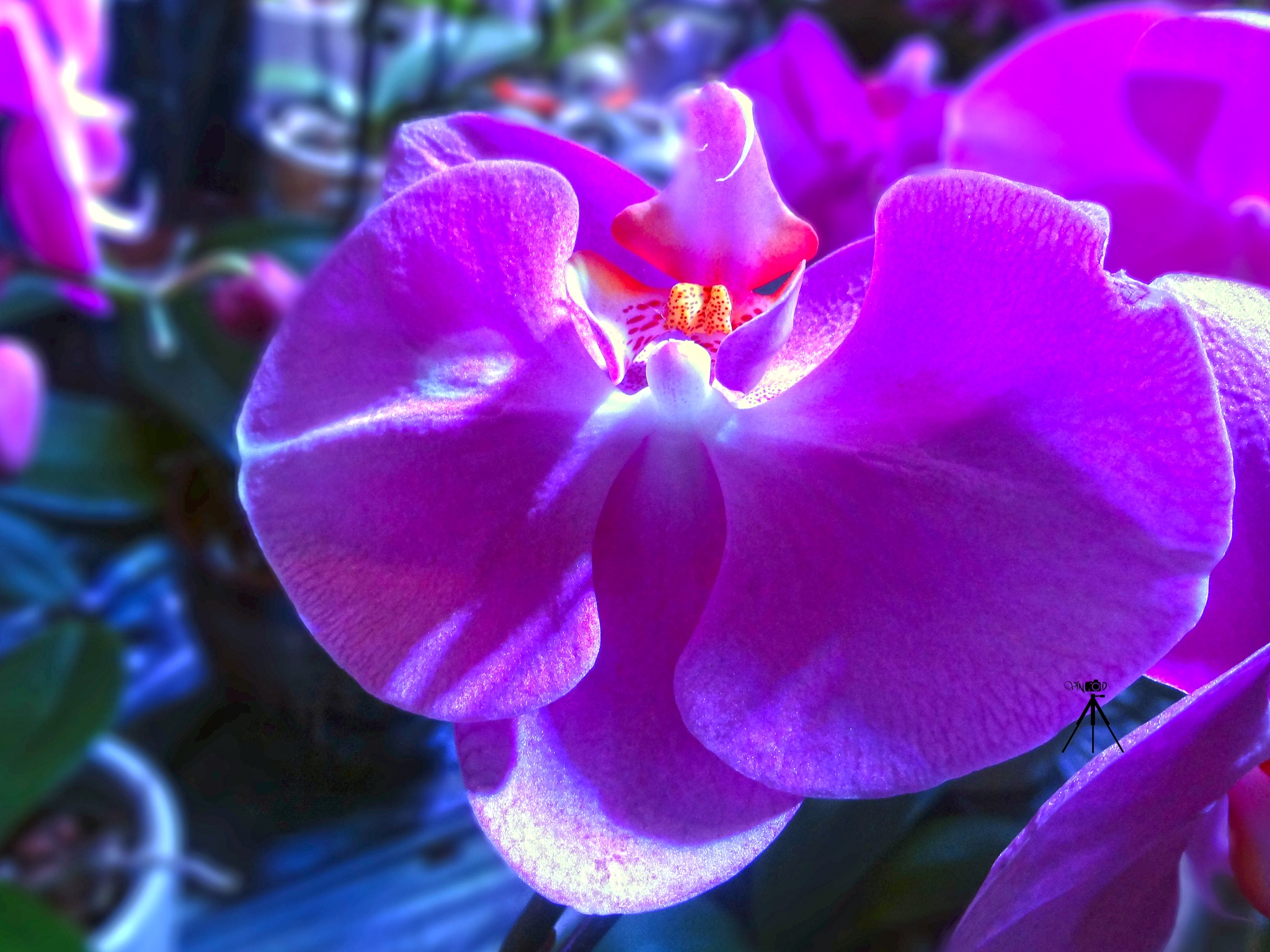 Photo in HDRI #orchid #flower #nature