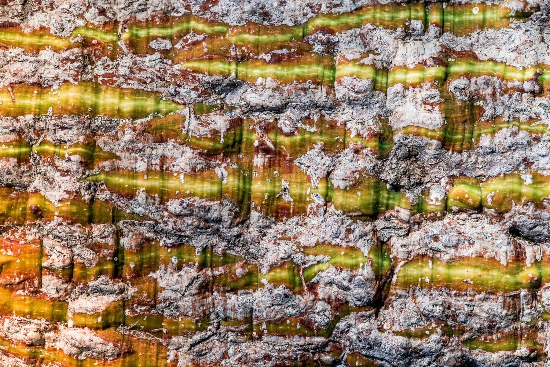 bark of tree by Alex Grigorjev