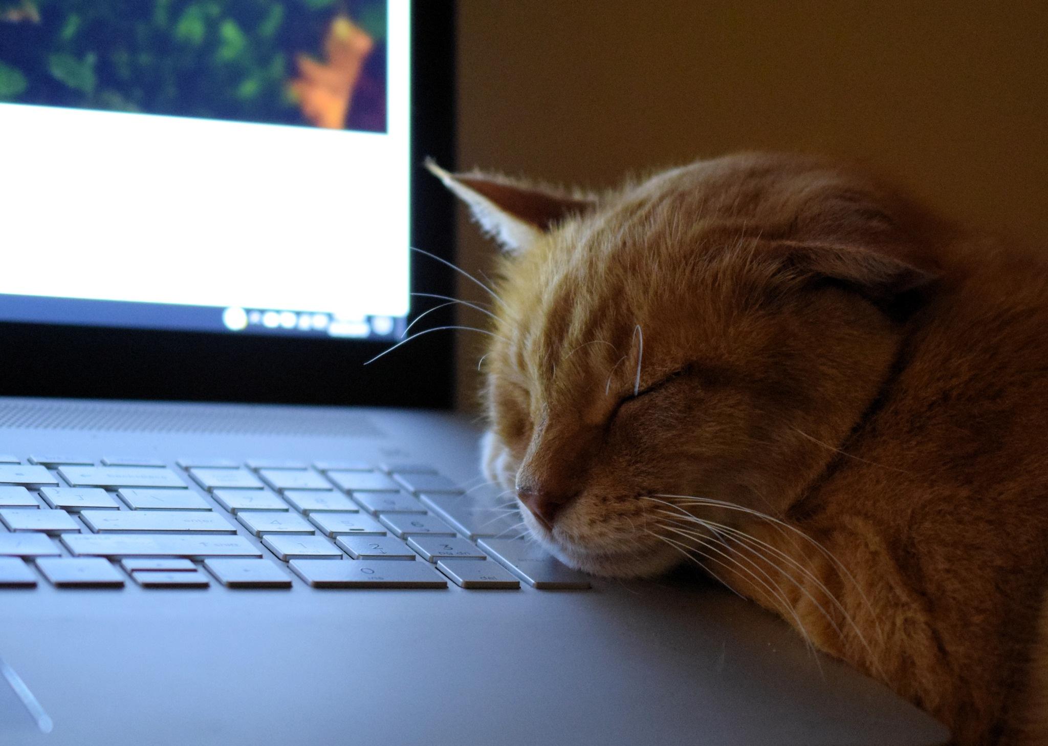 Stewart J Cat by wiseacre