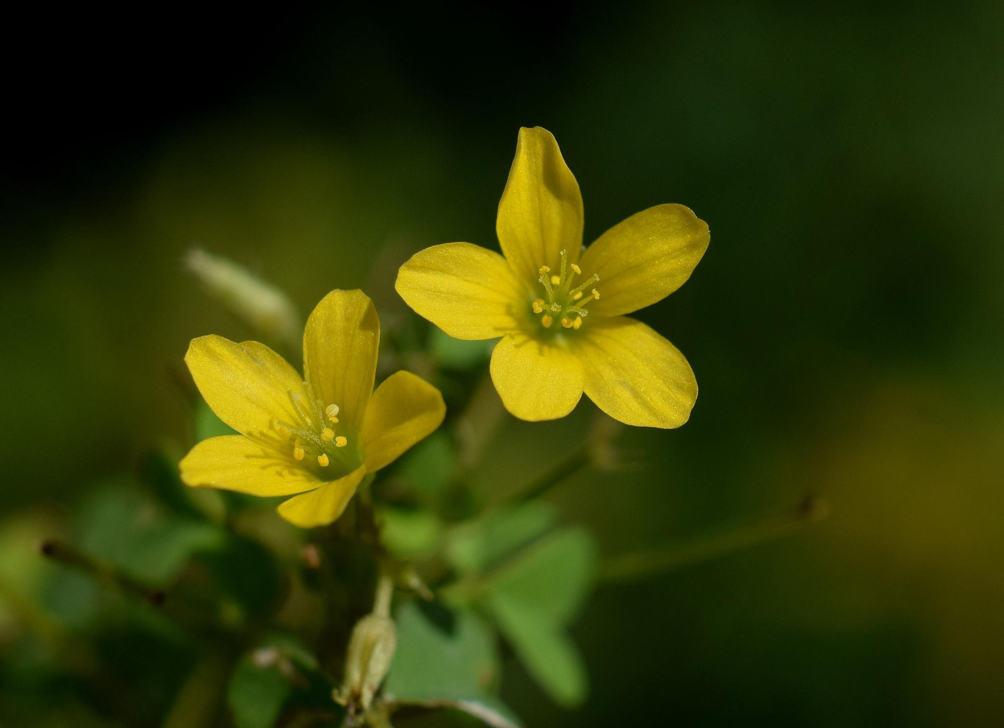 Wildflower or Weed by wiseacre
