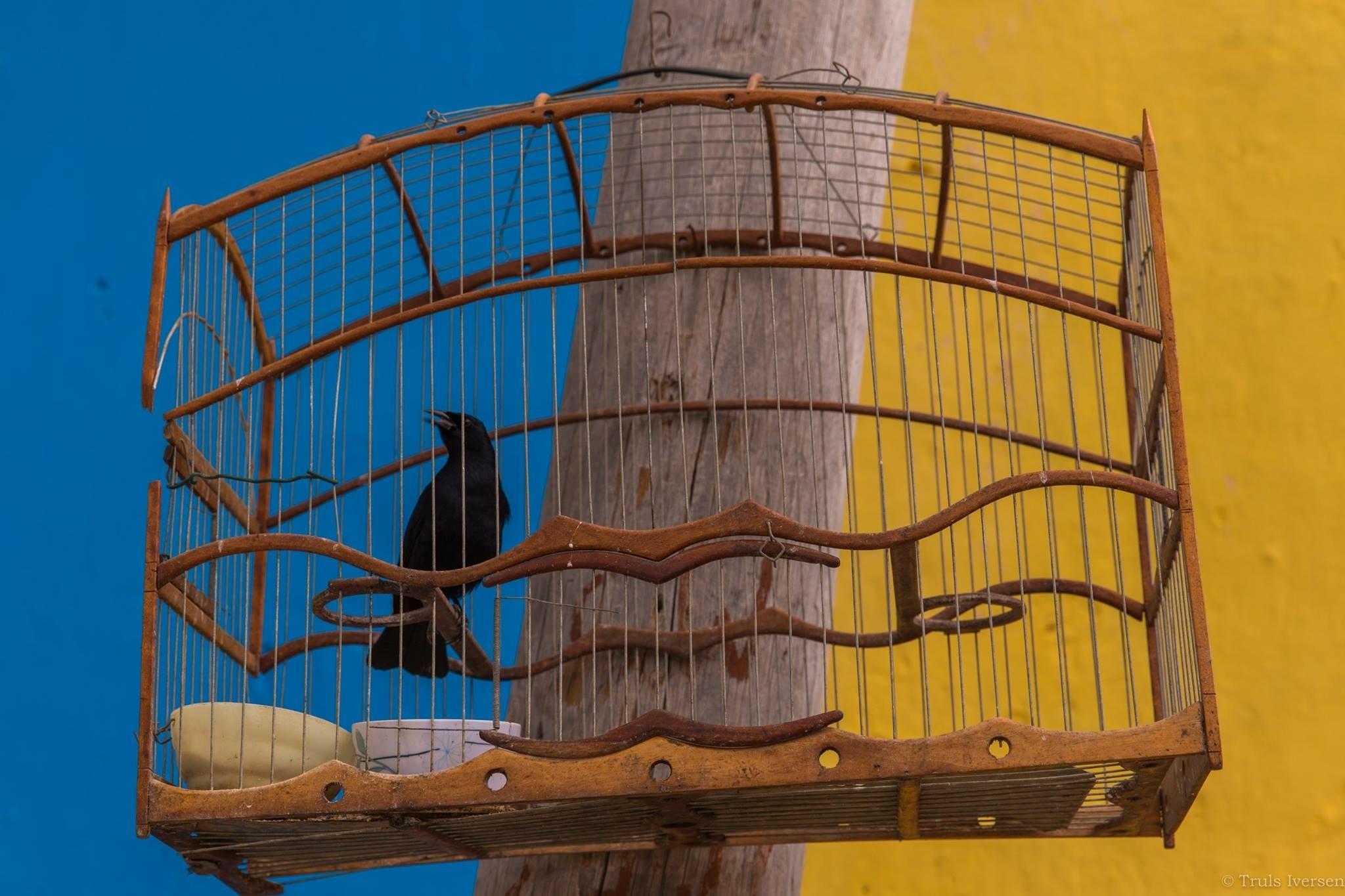 Neighbors share the bird by Truls Iversen