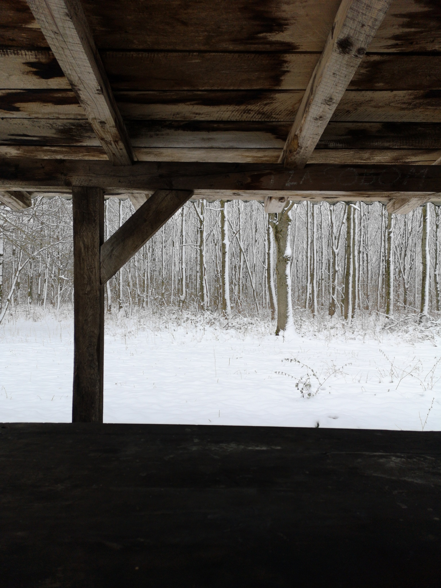 Photo in Nature #winter #nature #forest #wood #wooden #snow #cold
