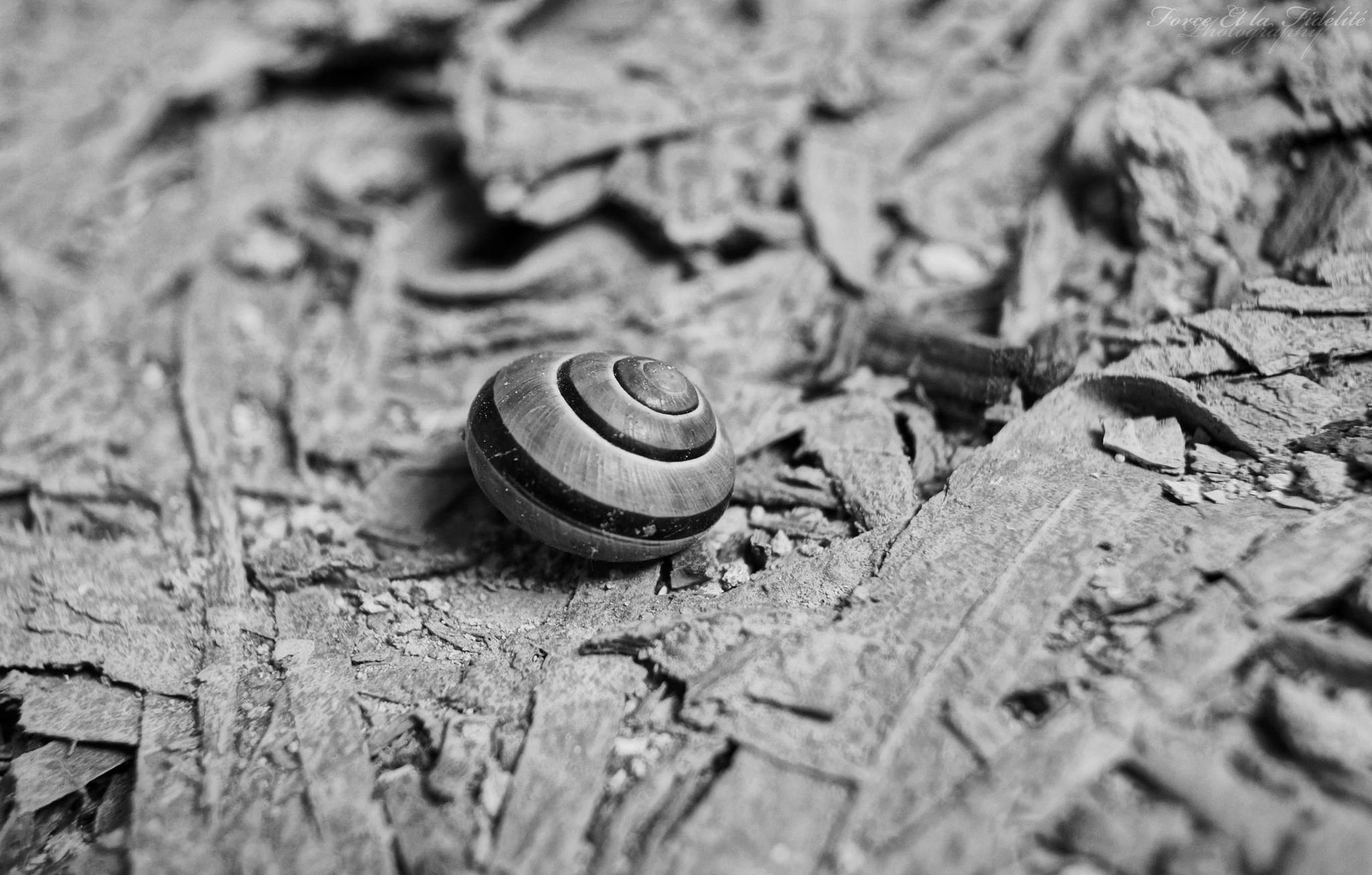 Photo in Animal #snail #schnecke #nature #animal #s/w #blackandwhite
