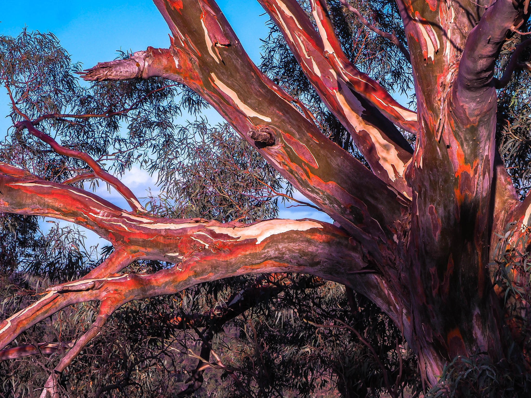 Colours Australis by asherD