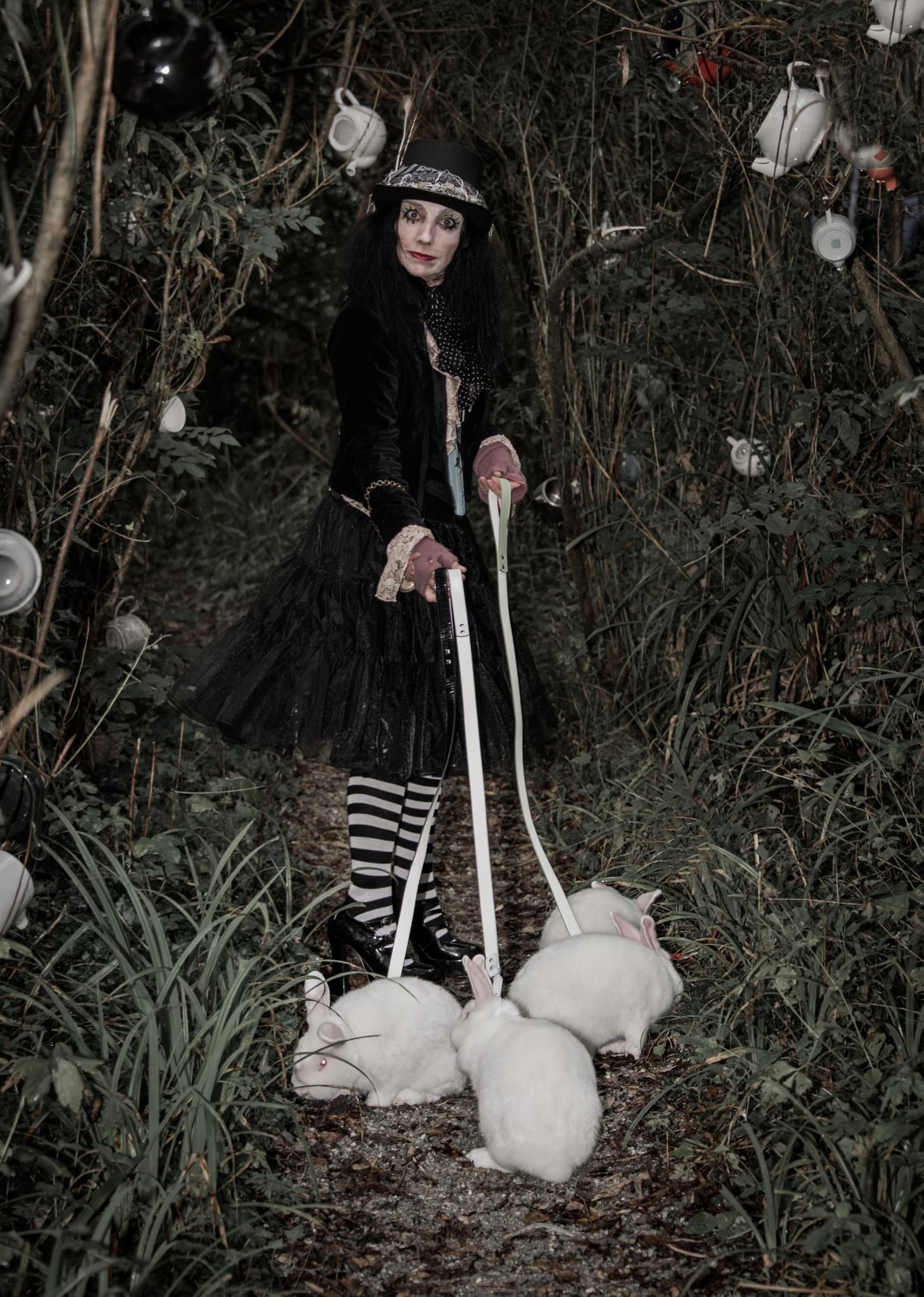 Mad Hatter by Mad Spaniel Photography