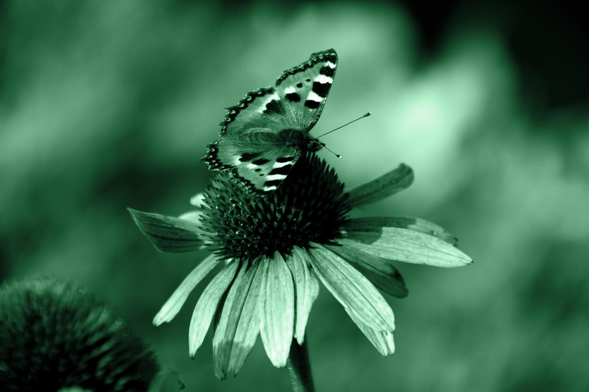 Butterfly by Kamila Šmídová