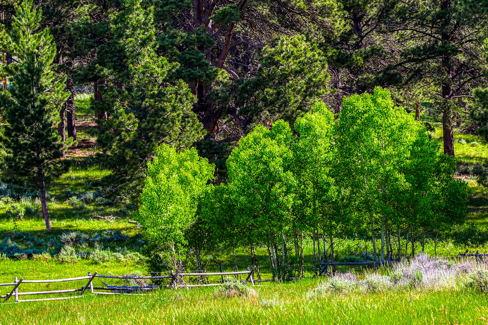 Nature's Shades Of Green by James Stewart