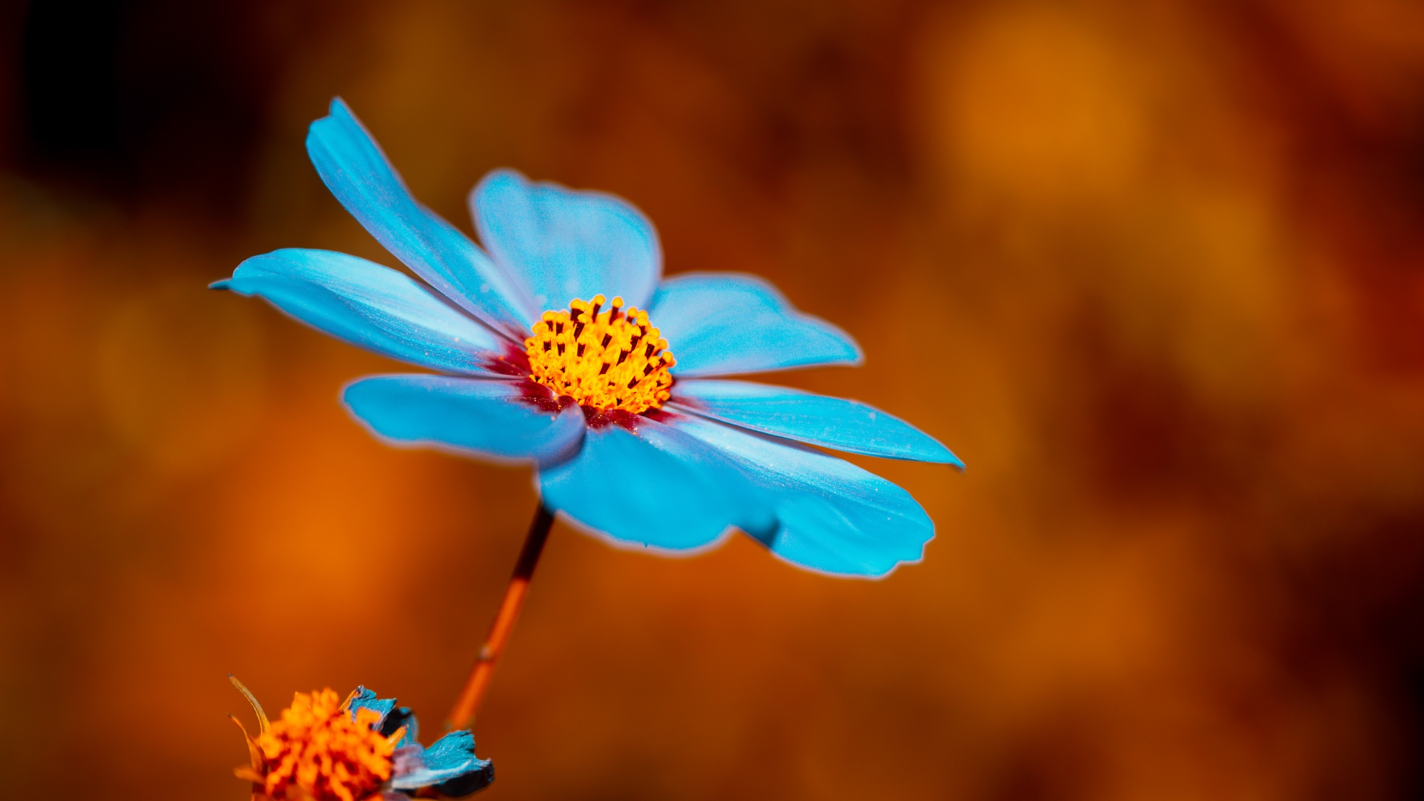 Blue and Orange by Andreas schorer