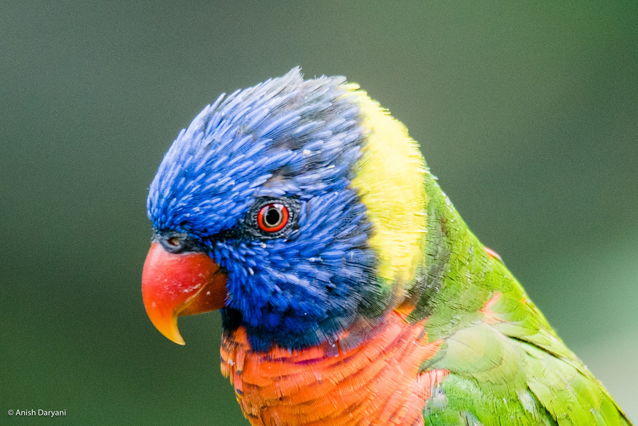 Rainbow with Wings by Anish Daryani