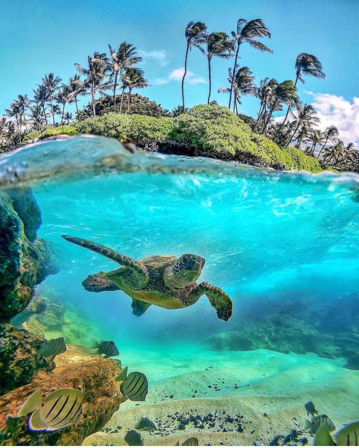 Hawaii, USA by Jiayi Hax