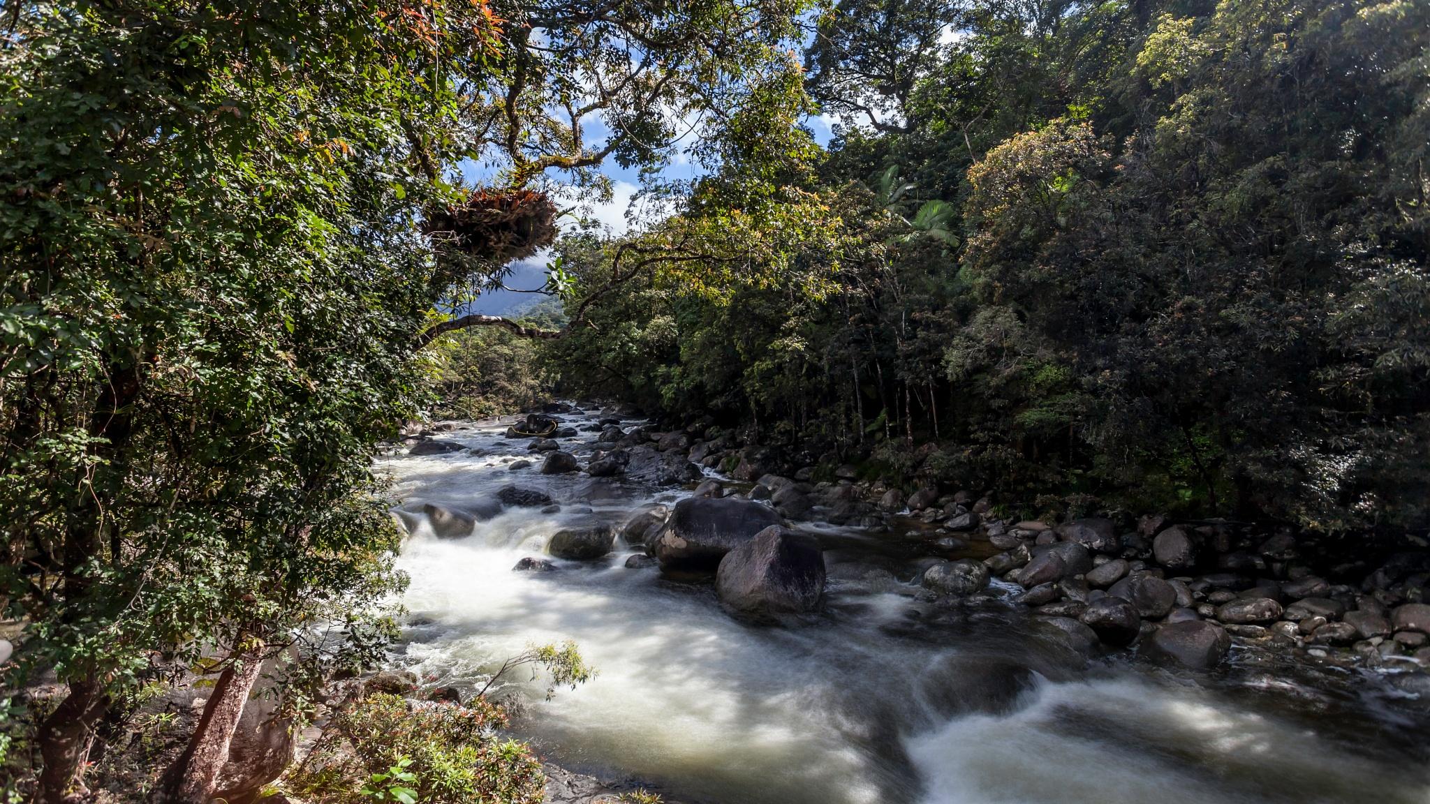 Mossman Gorge by Bill Schroeder & Vicki Jury