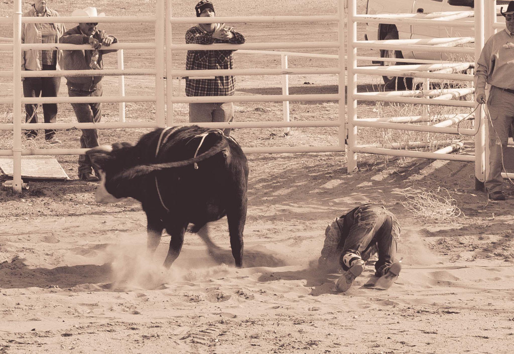 texas bullriding by Connie Anderson
