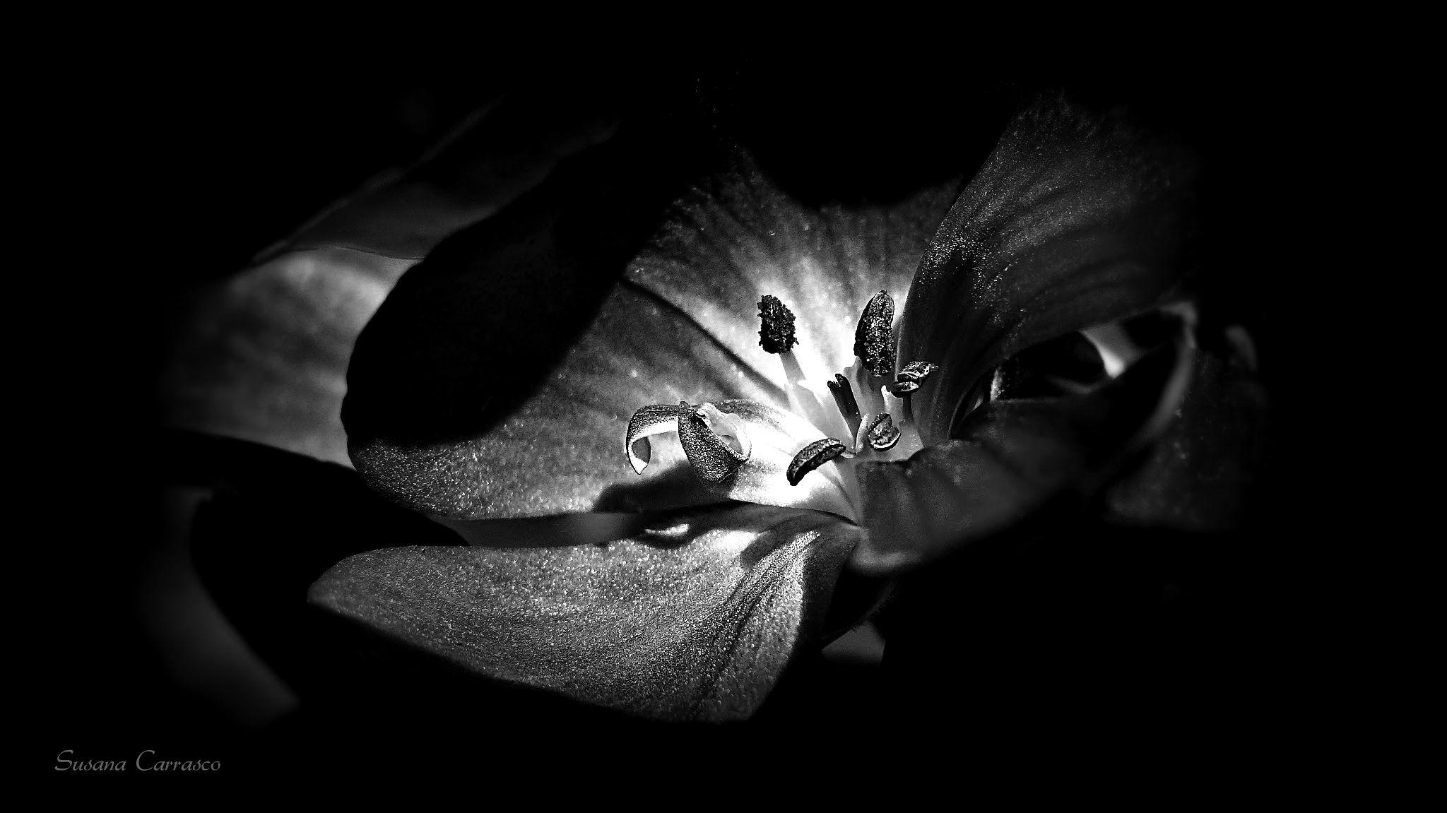 Untitled by SusanaCarrasco
