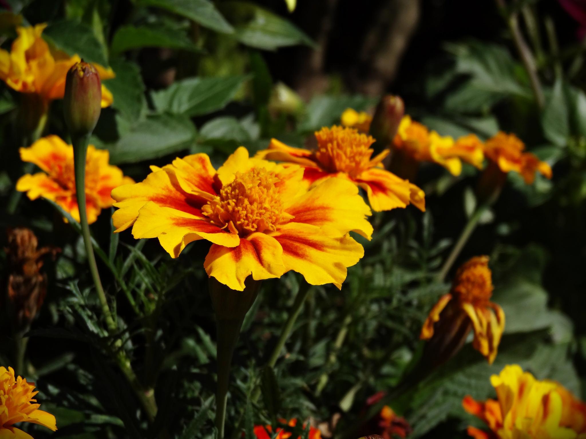 Flores by SusanaCarrasco