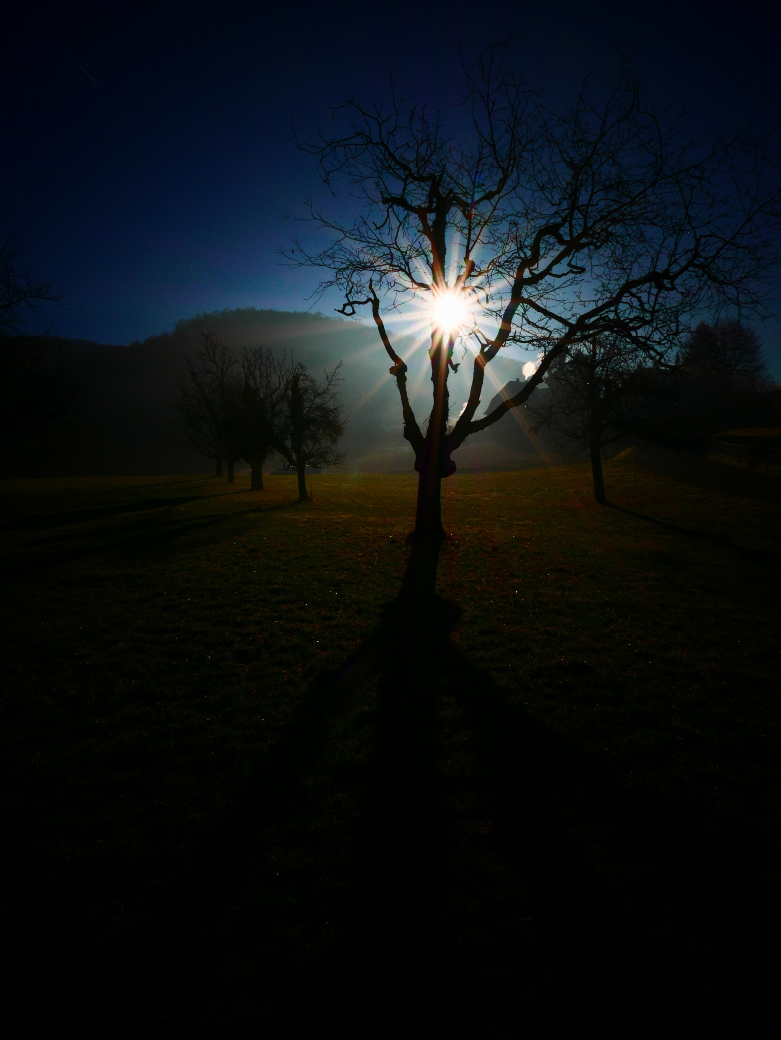 Gegenlicht am Morgen by percy ottinger
