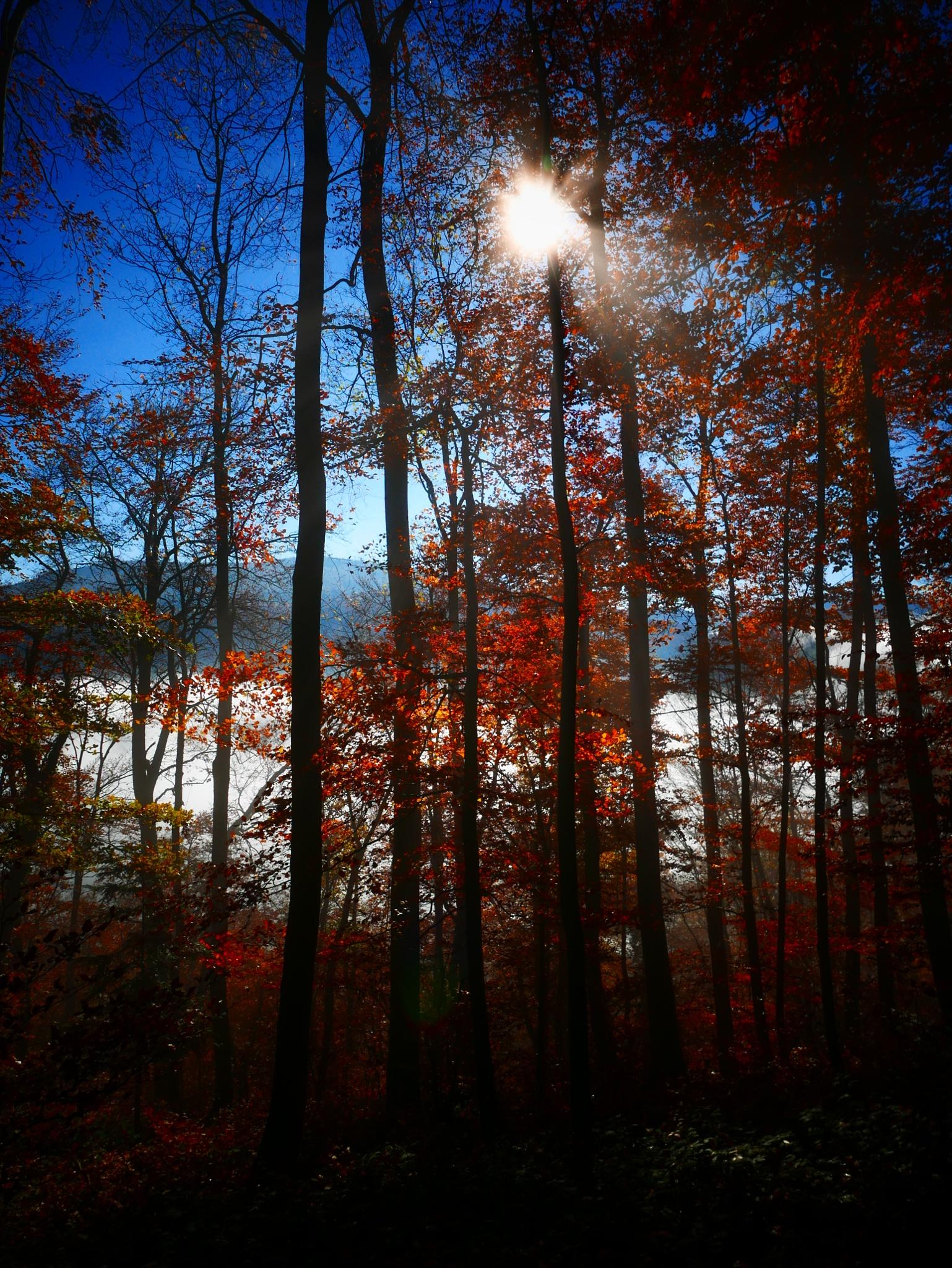 Das war der Herbst. by percy ottinger
